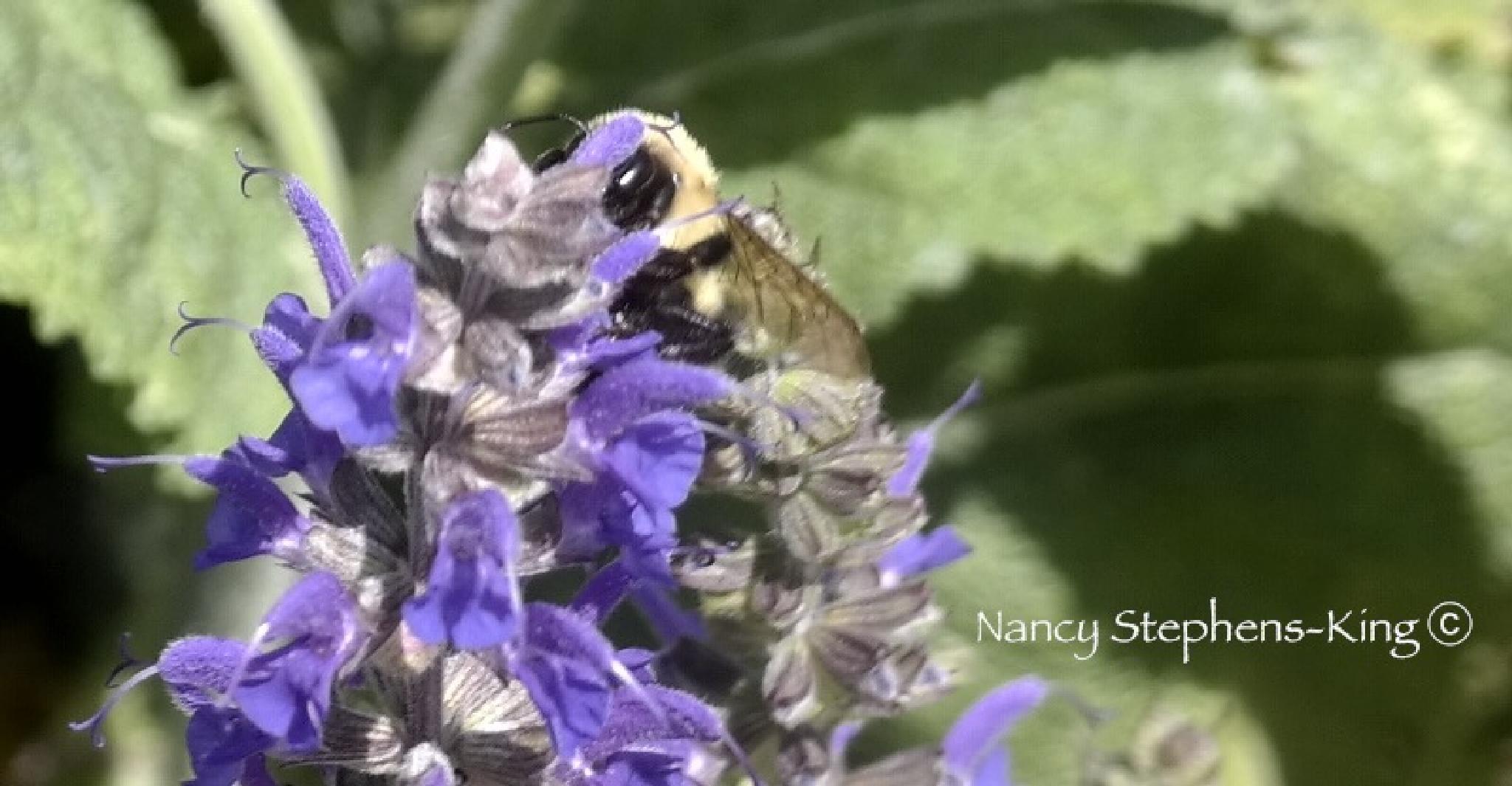 Eye See You, Mr. Bee by nstephensking