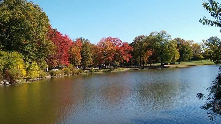 Fall by lisbeth.villegas2
