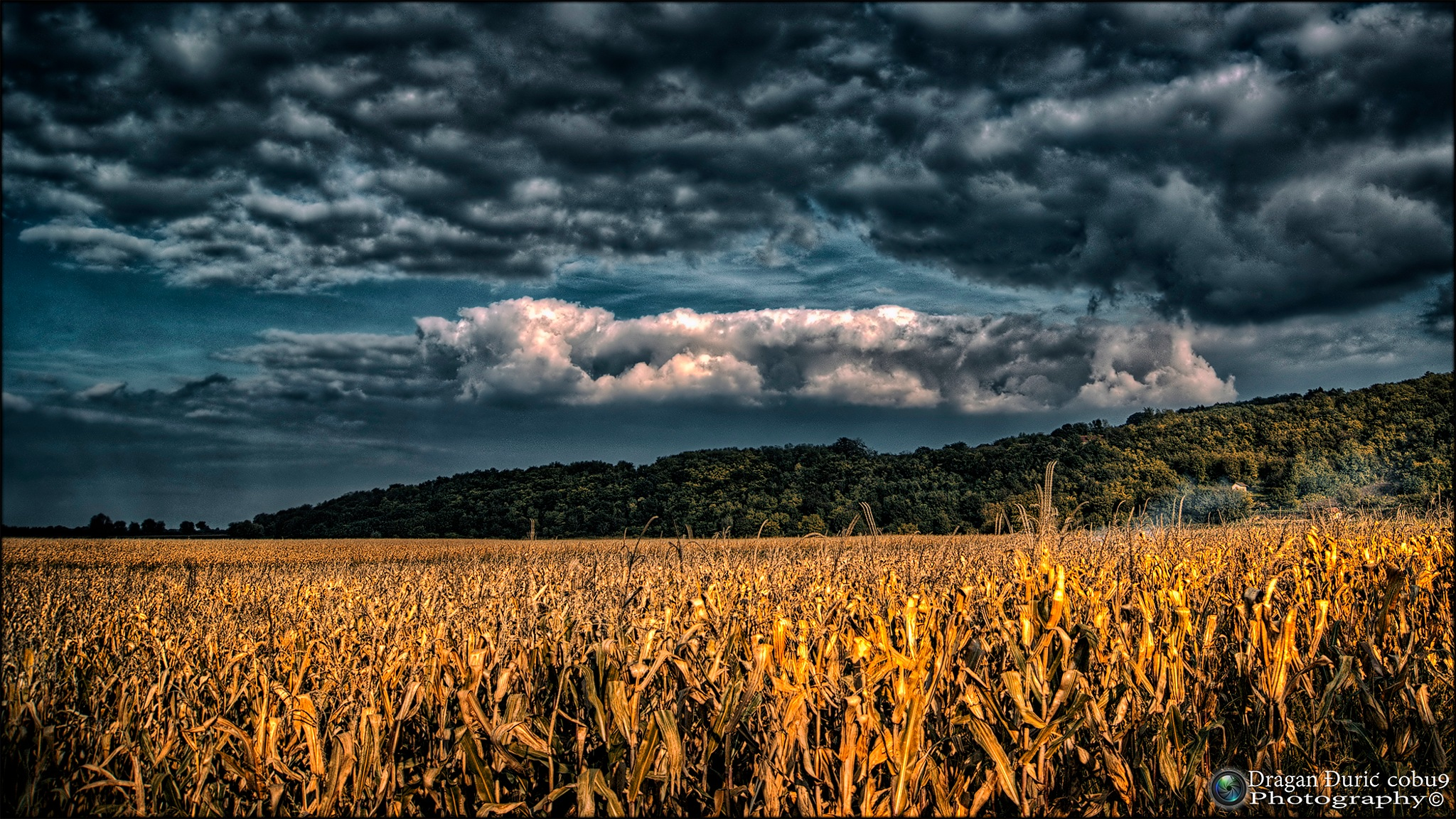 Autumn by Dragan Đurić