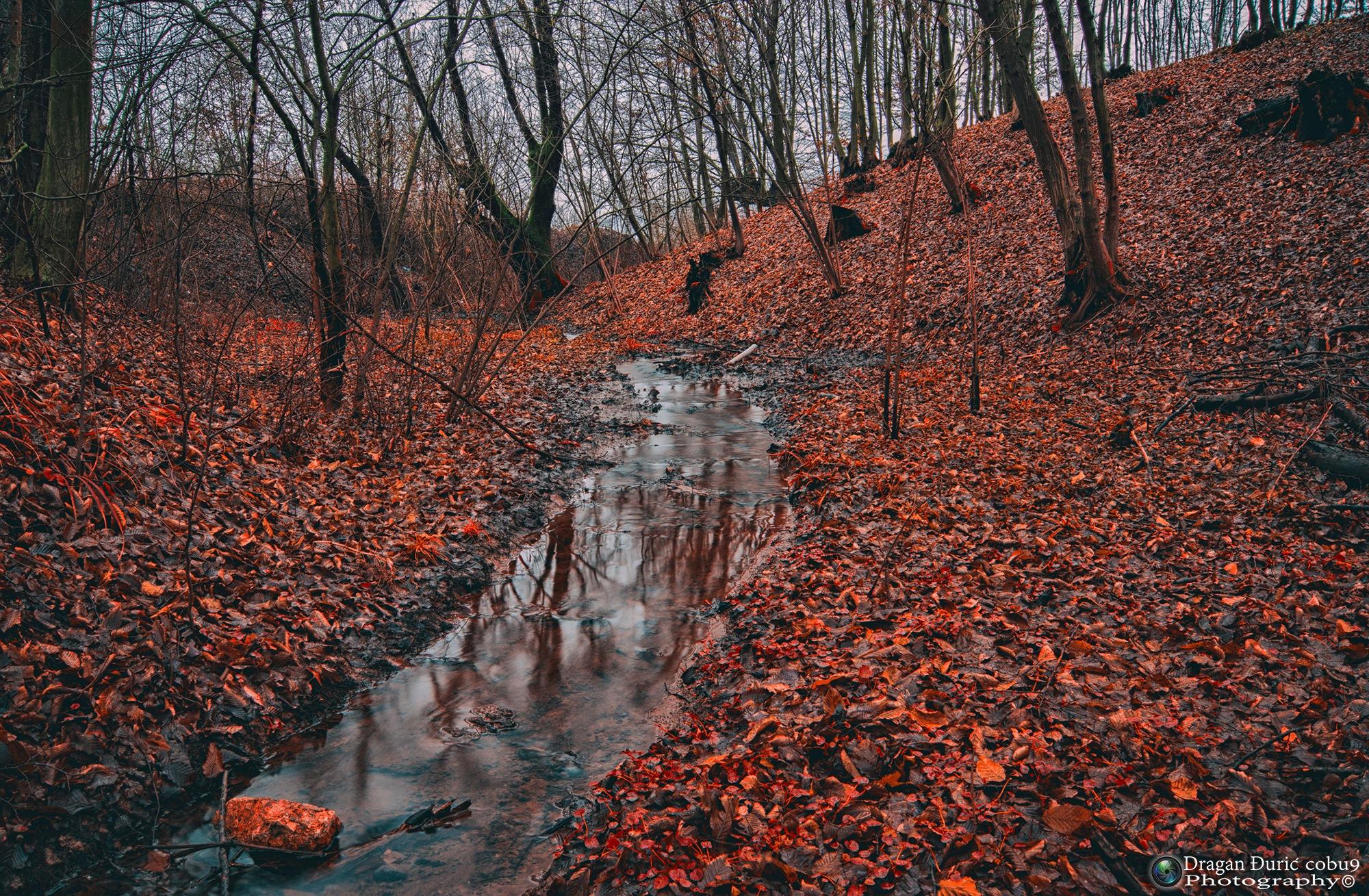 Autumn scene by Dragan Đurić