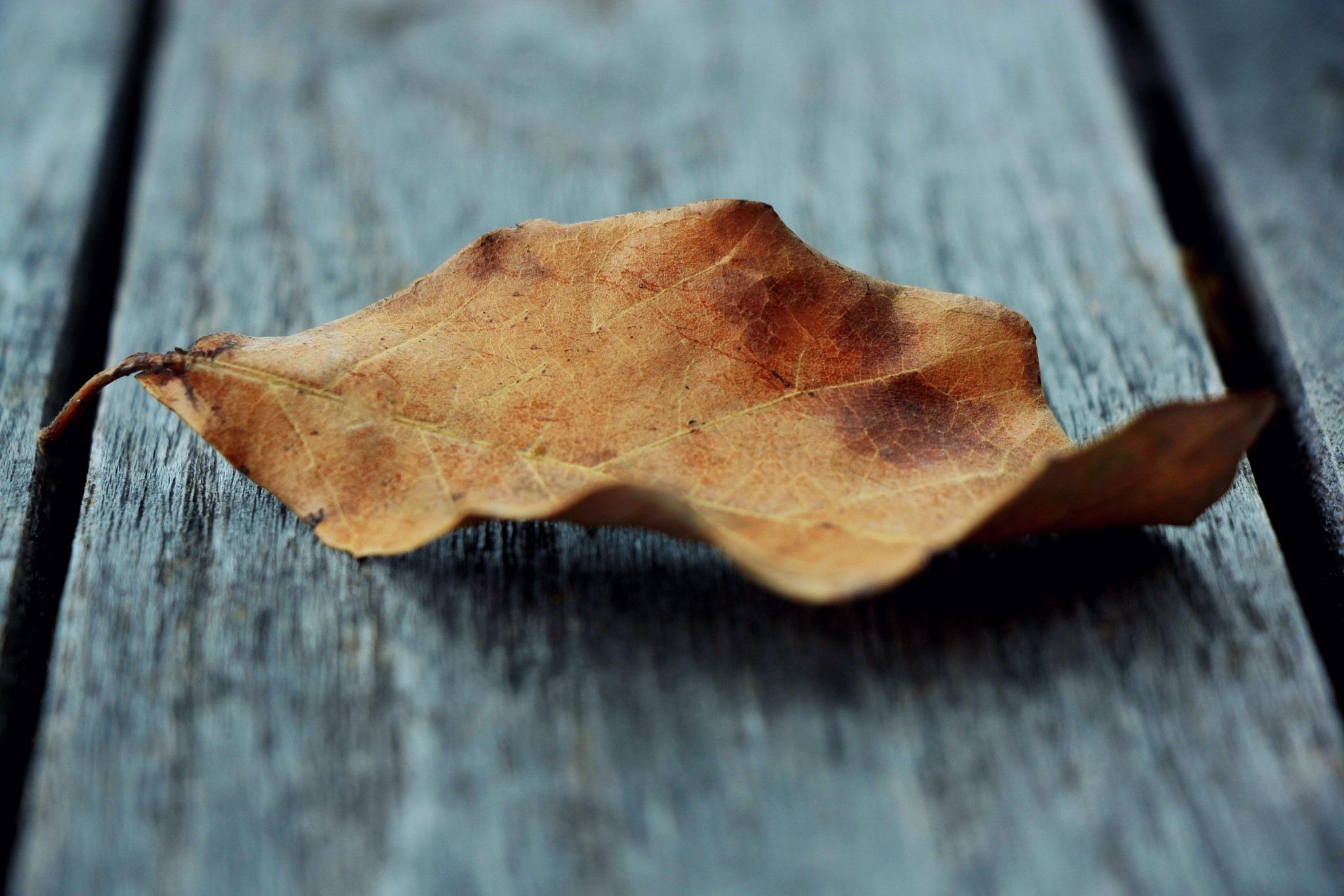 Dry leaf by Adam Wyciszkiewicz