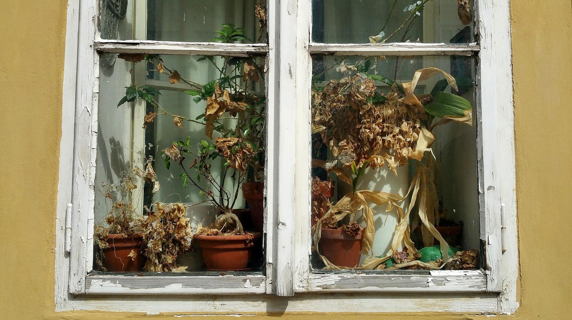 Window by Adam Wyciszkiewicz