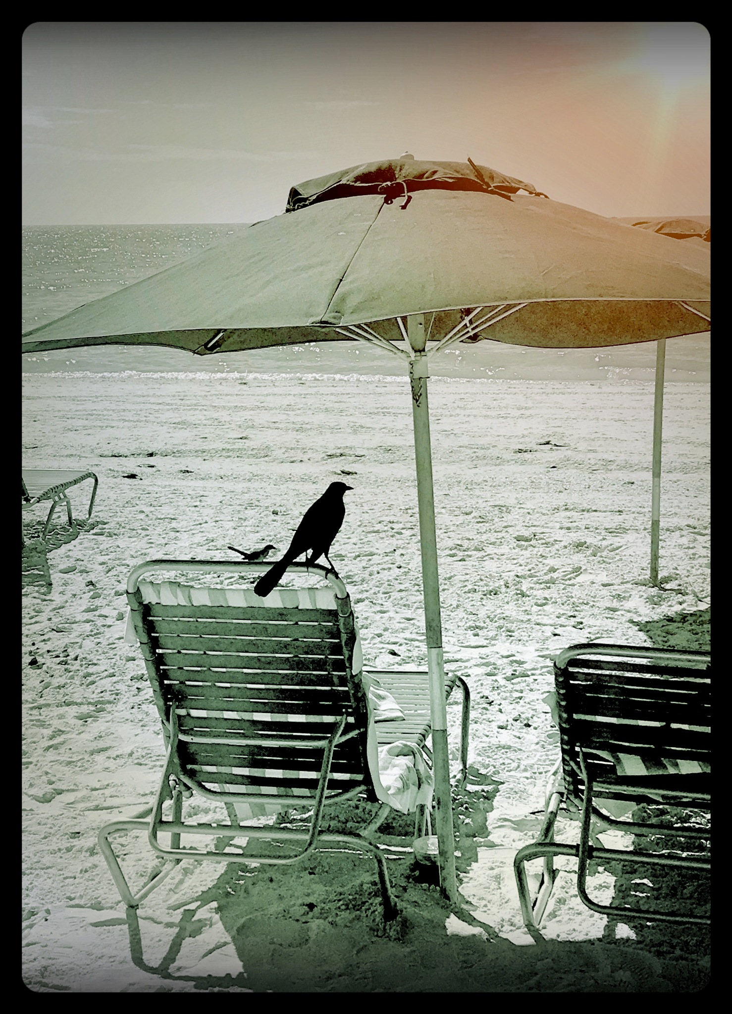 Blackbird by cathy.pepe.9