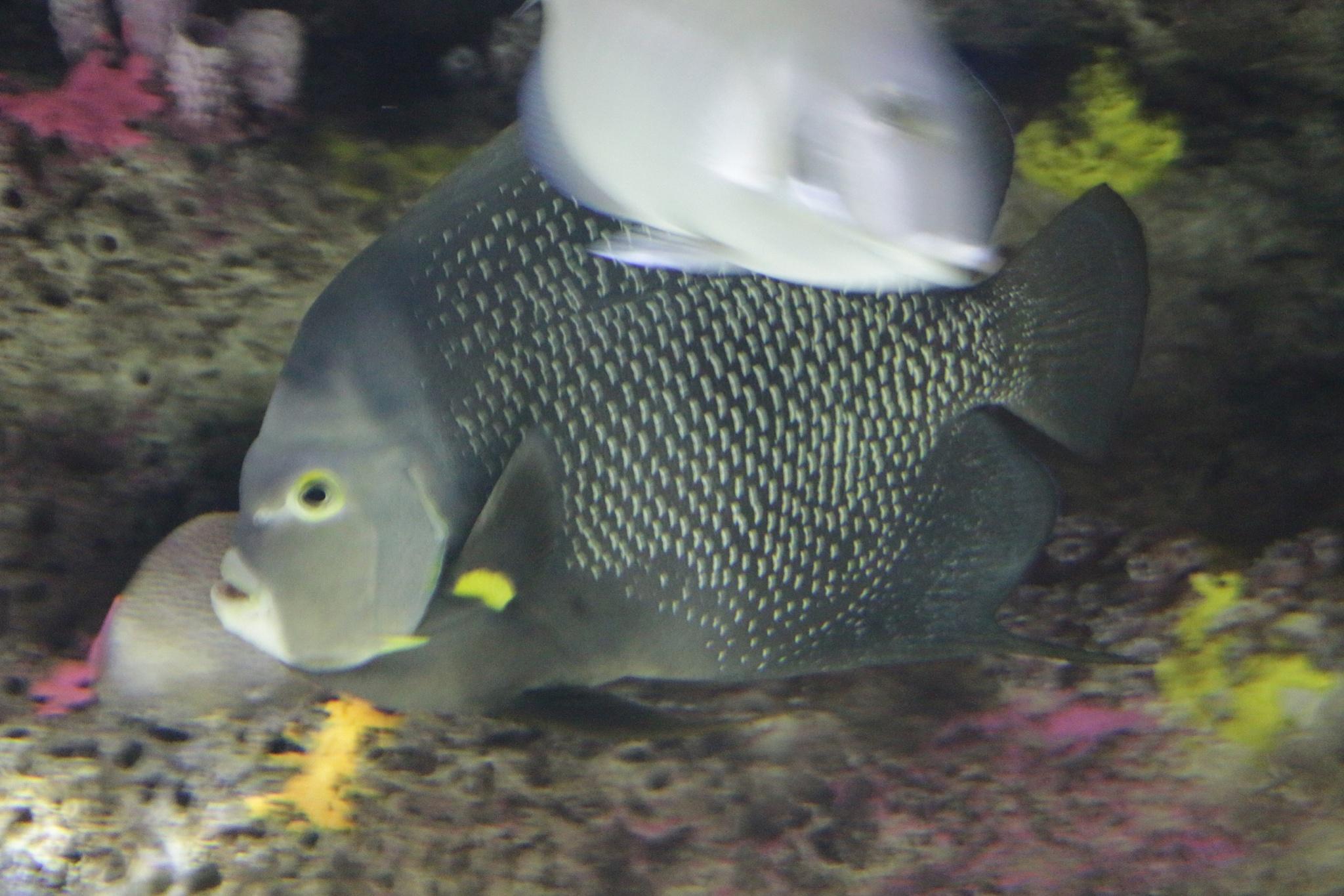 Fish of the deep by DAVatalaro