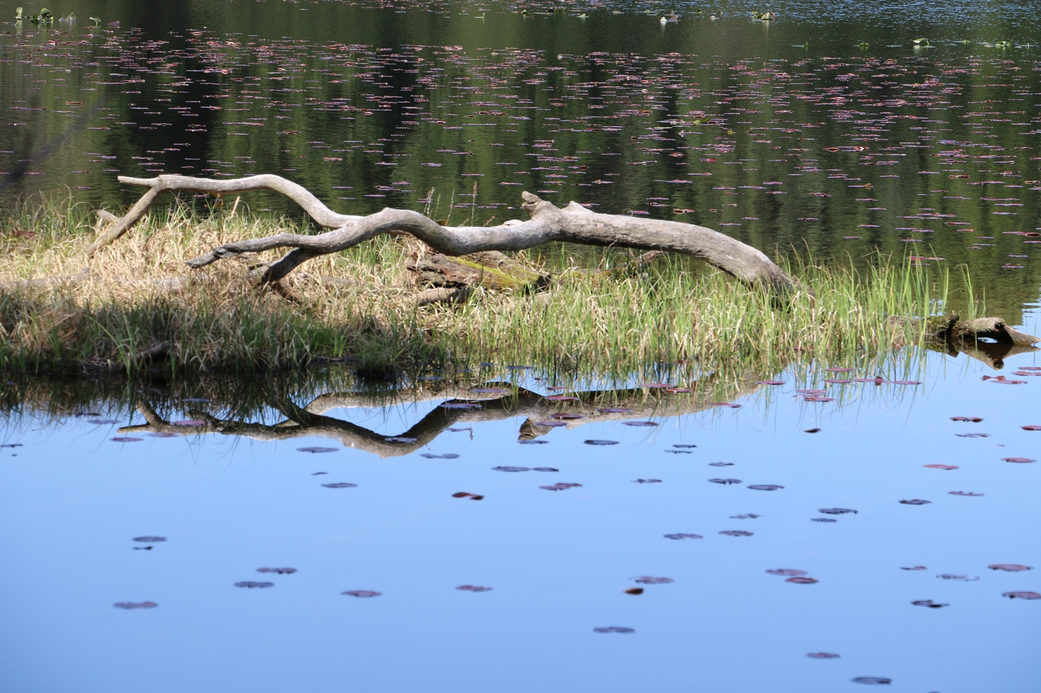 Waterscape lake image by DAVatalaro
