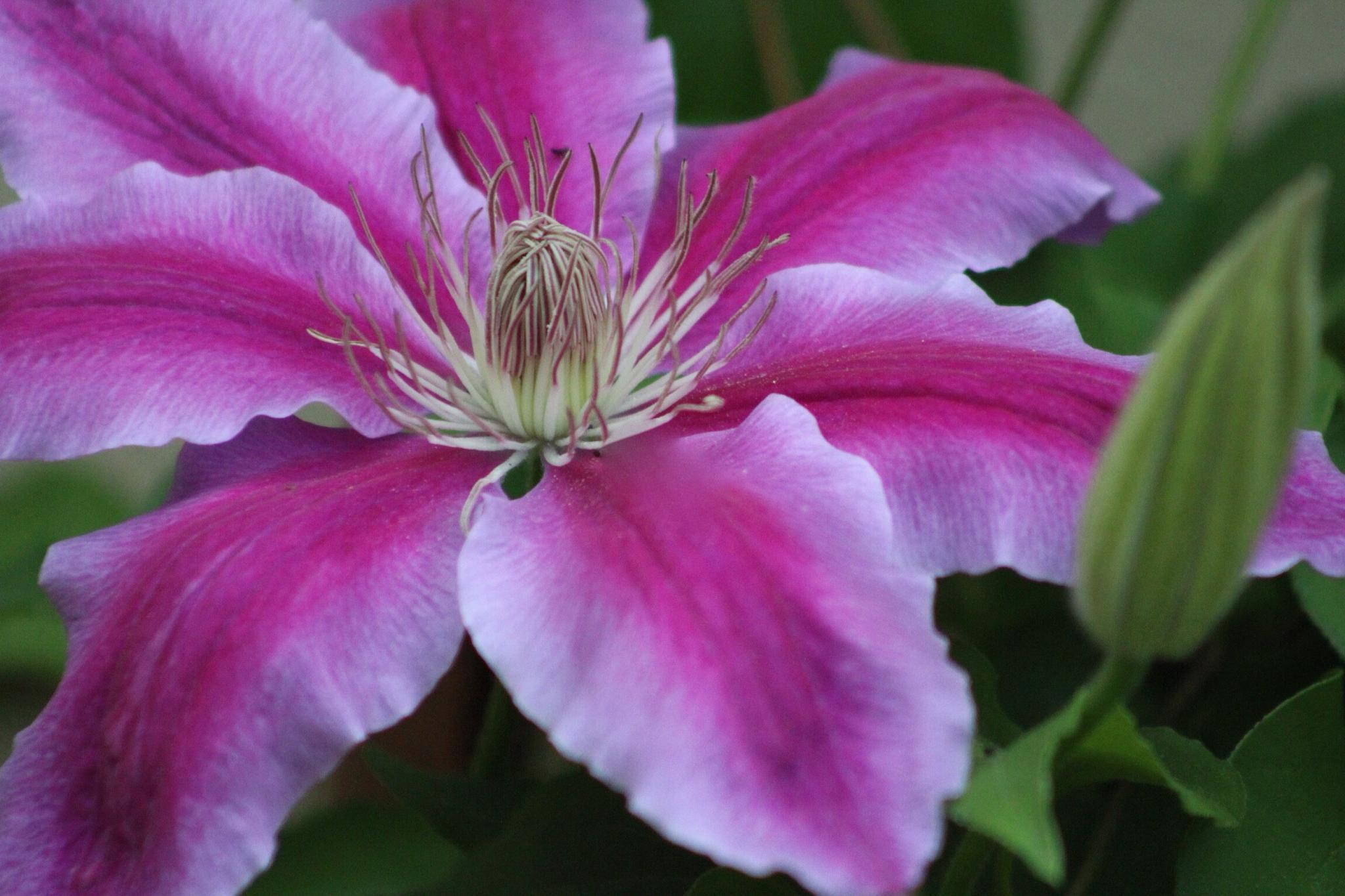 Macro flower by DAVatalaro