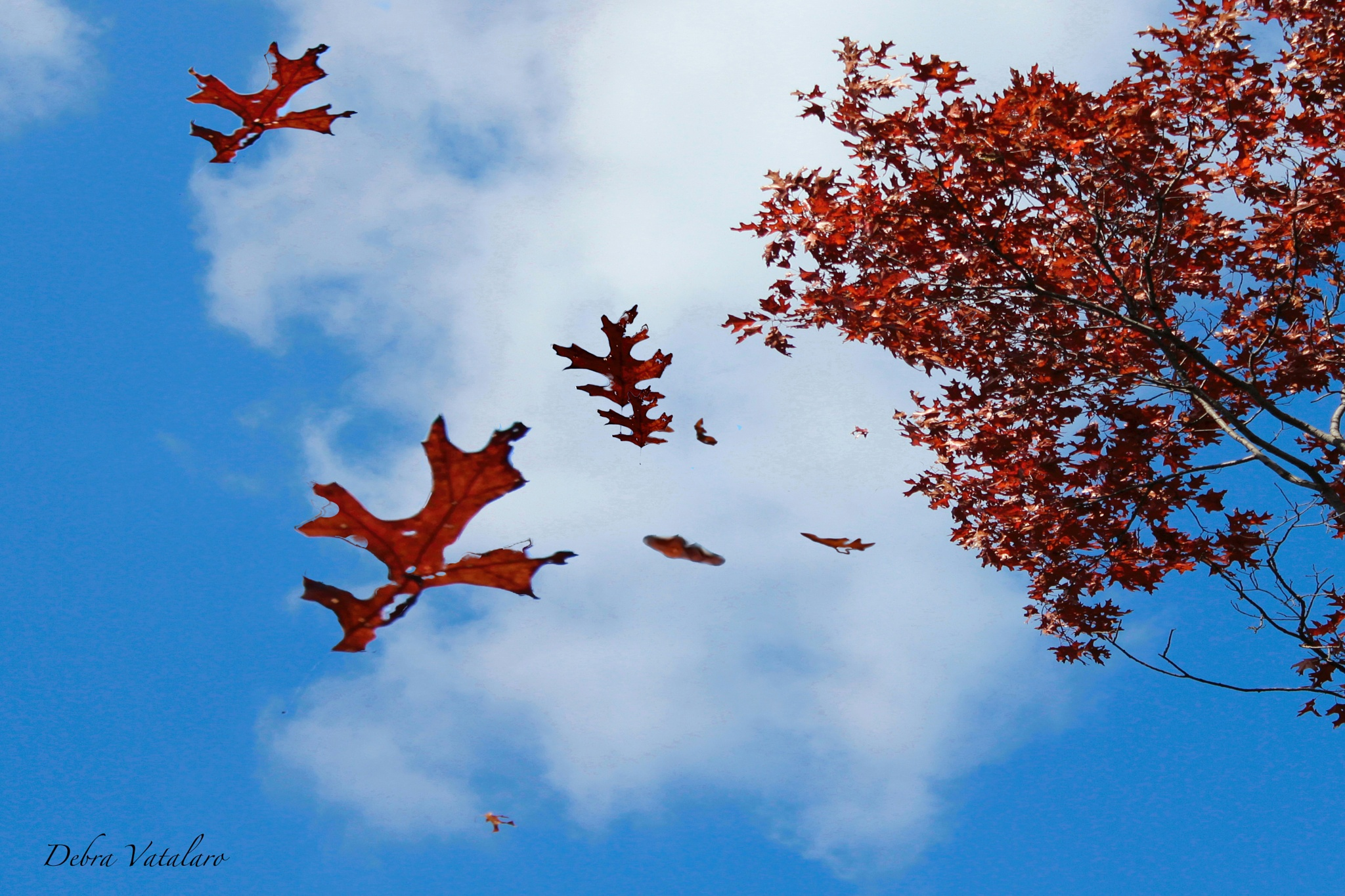 Winds of fall  by DAVatalaro