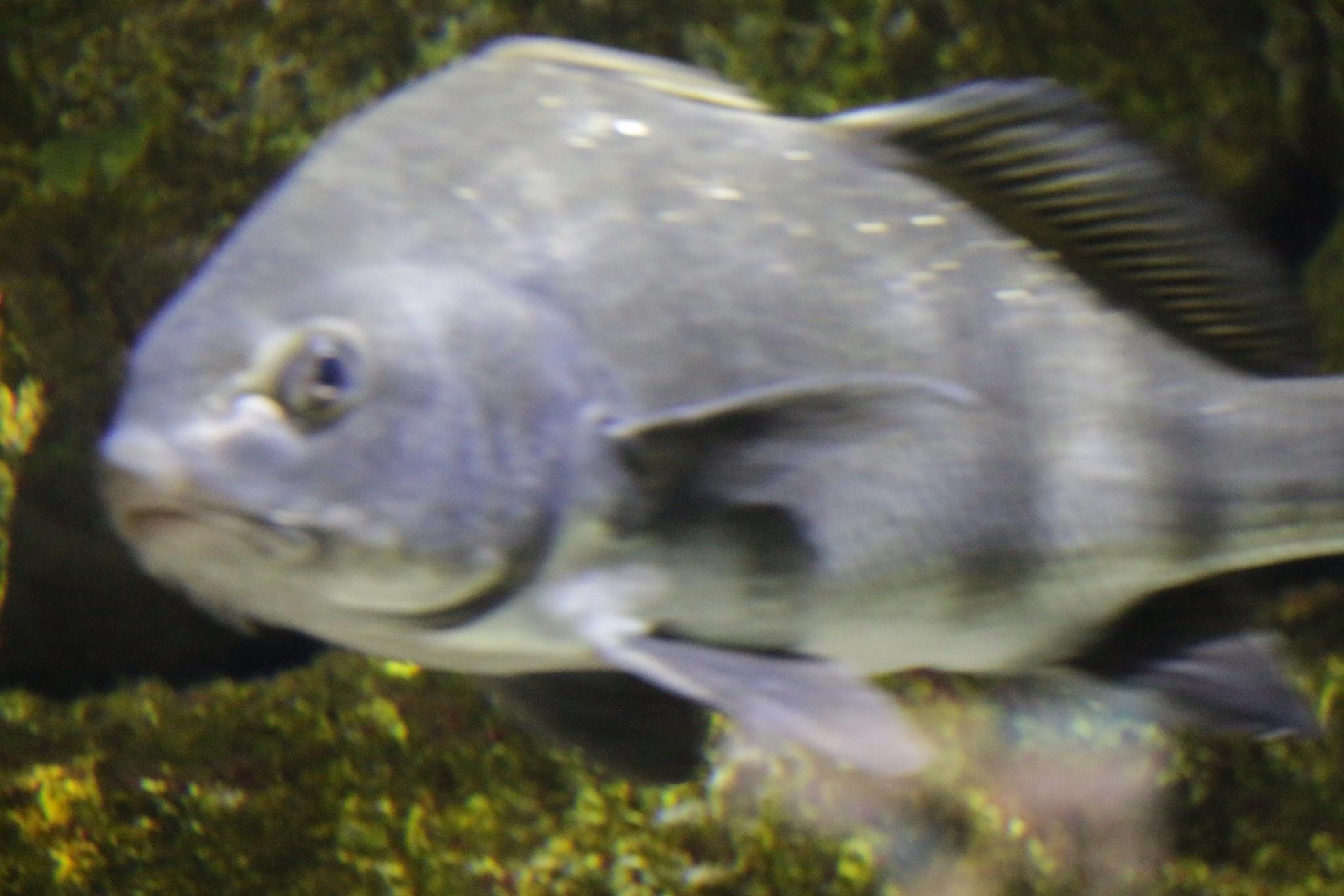Big Fish  by DAVatalaro