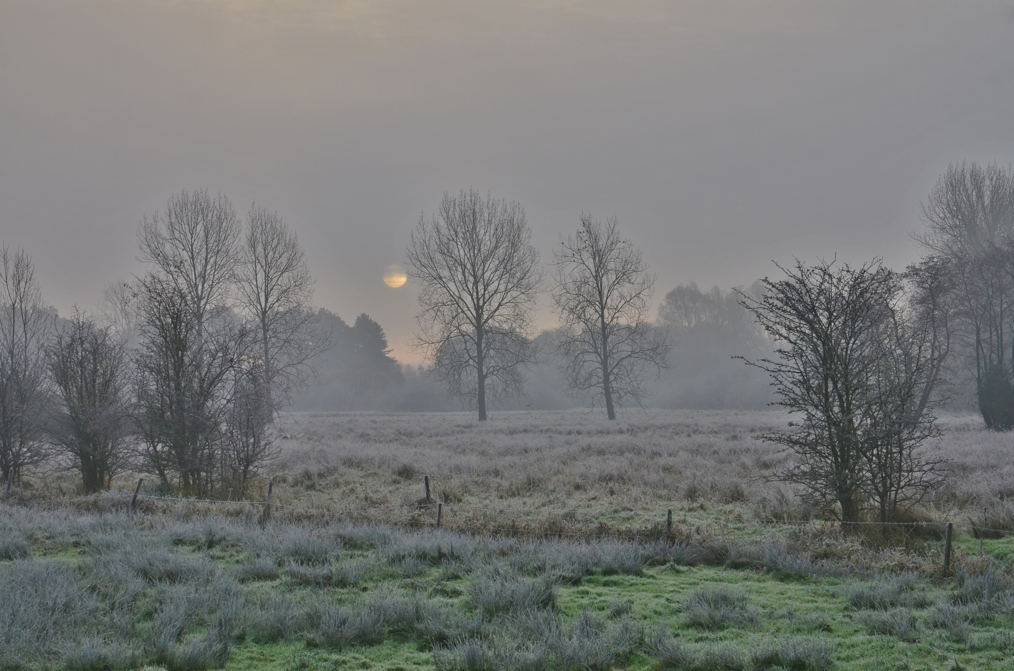 Winter's Morning by Dom Gwilliam-Bell