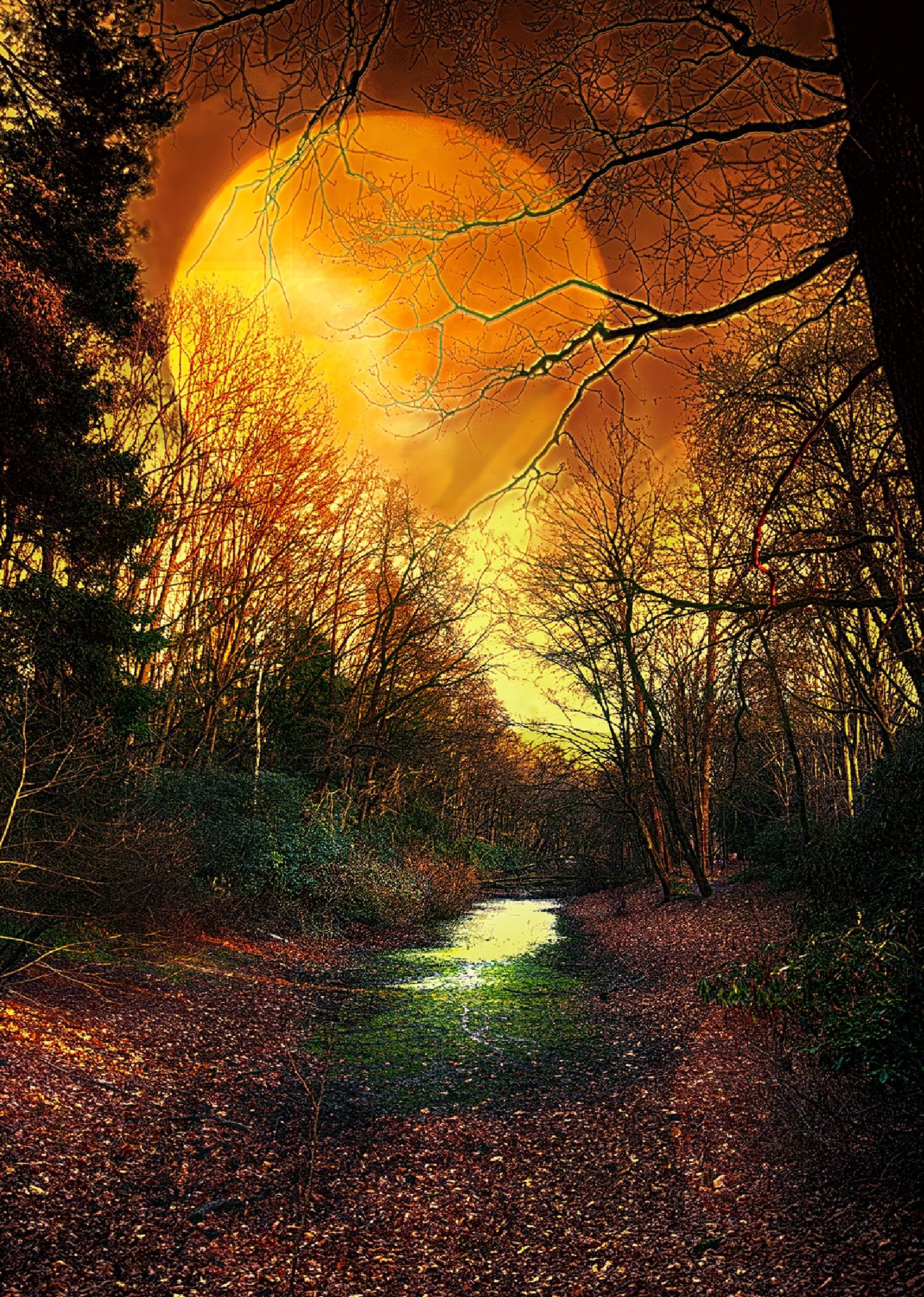 when evening falls by egonzitter