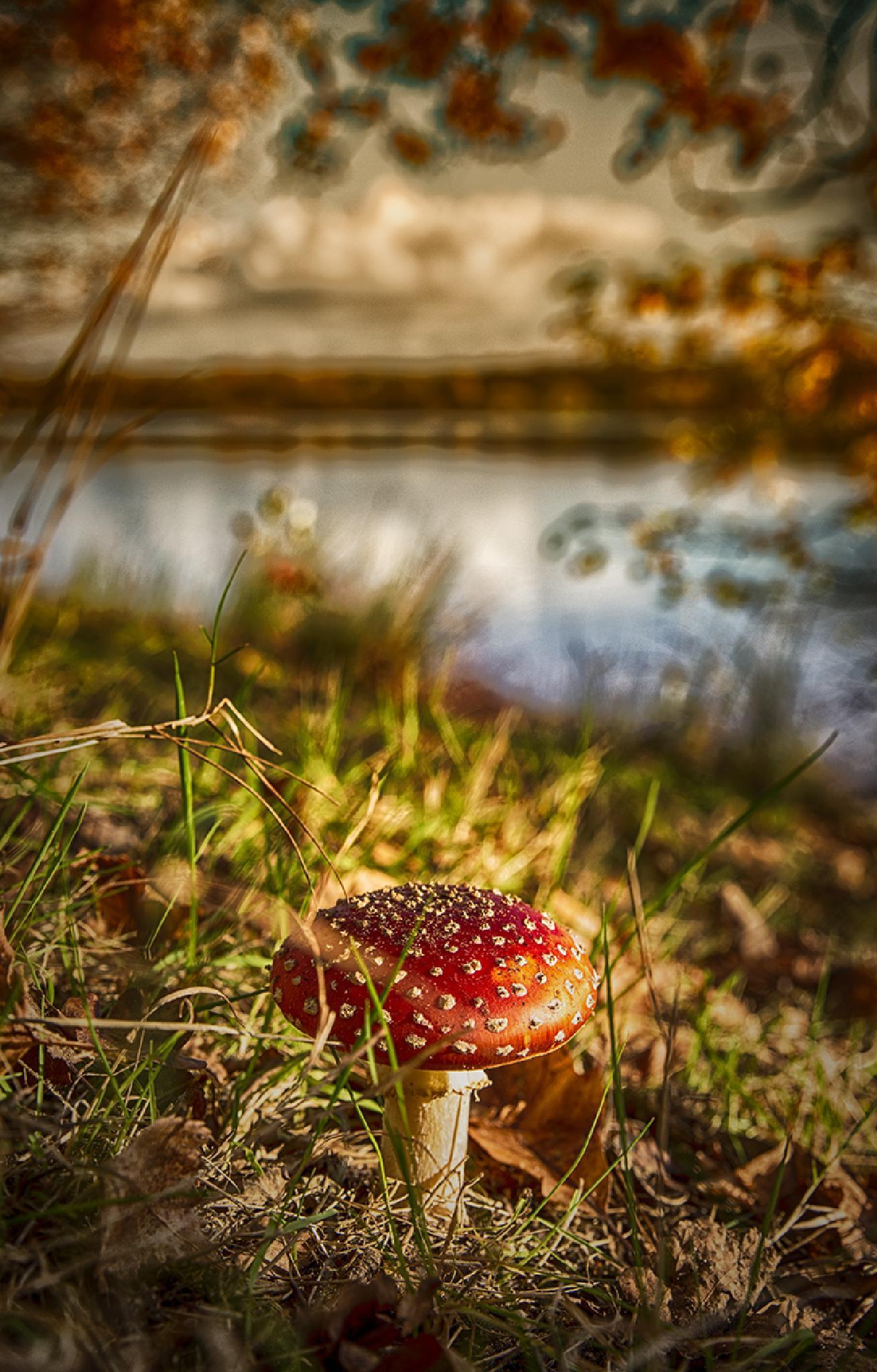 Photo in Landscape #mushroom #amenita #fly agaric #lake #autumn