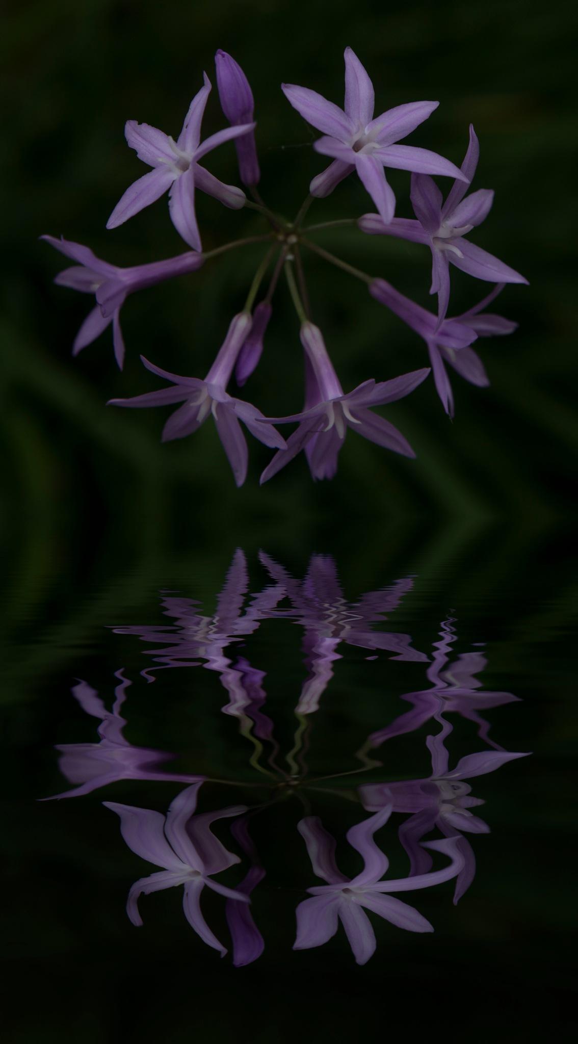 Purple reflection by egonzitter