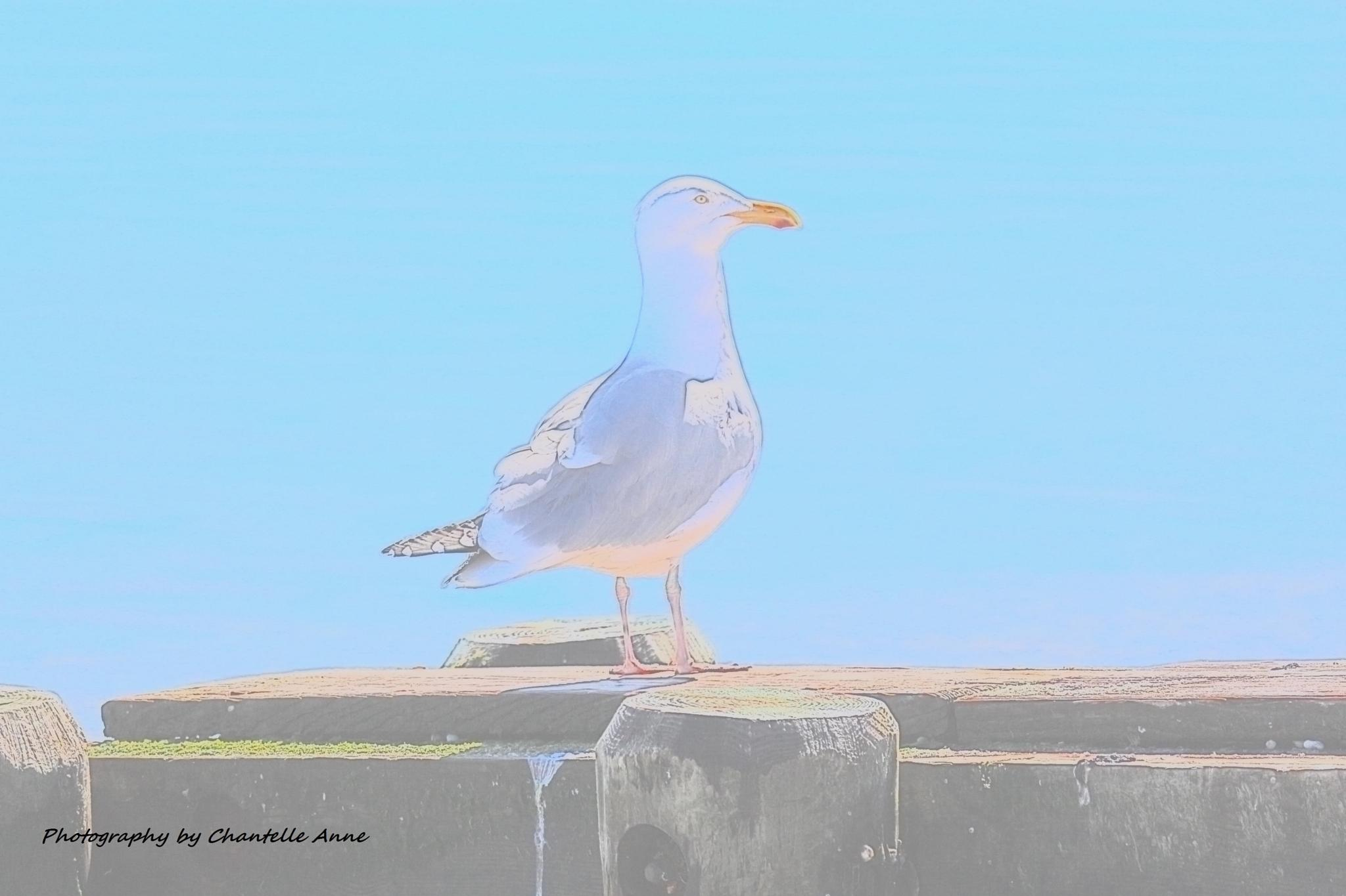 Seagull by Chantelle Anne