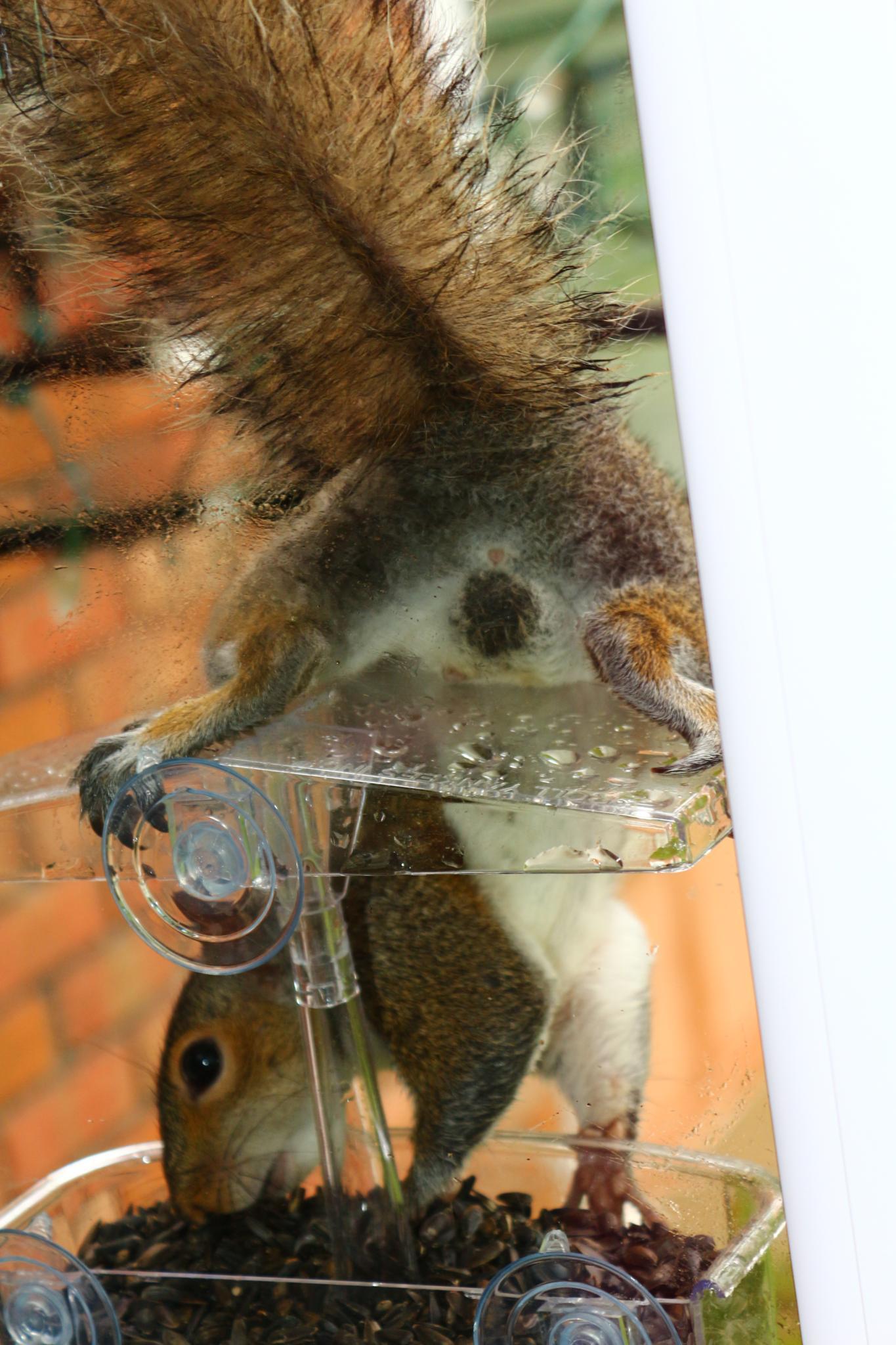 Mr Squirrel by Chantelle Anne