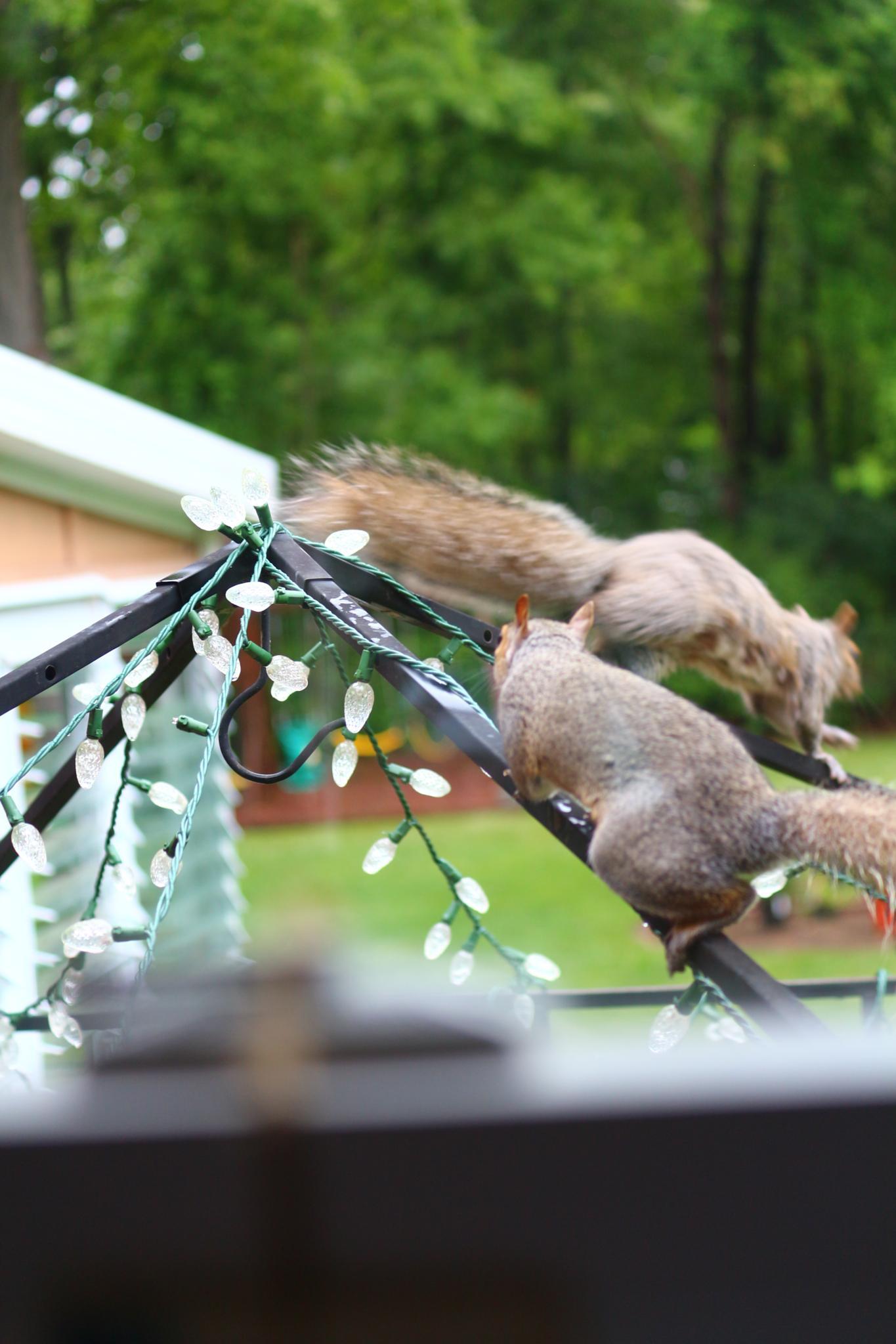 Mr & Mrs Squirrel by Chantelle Anne