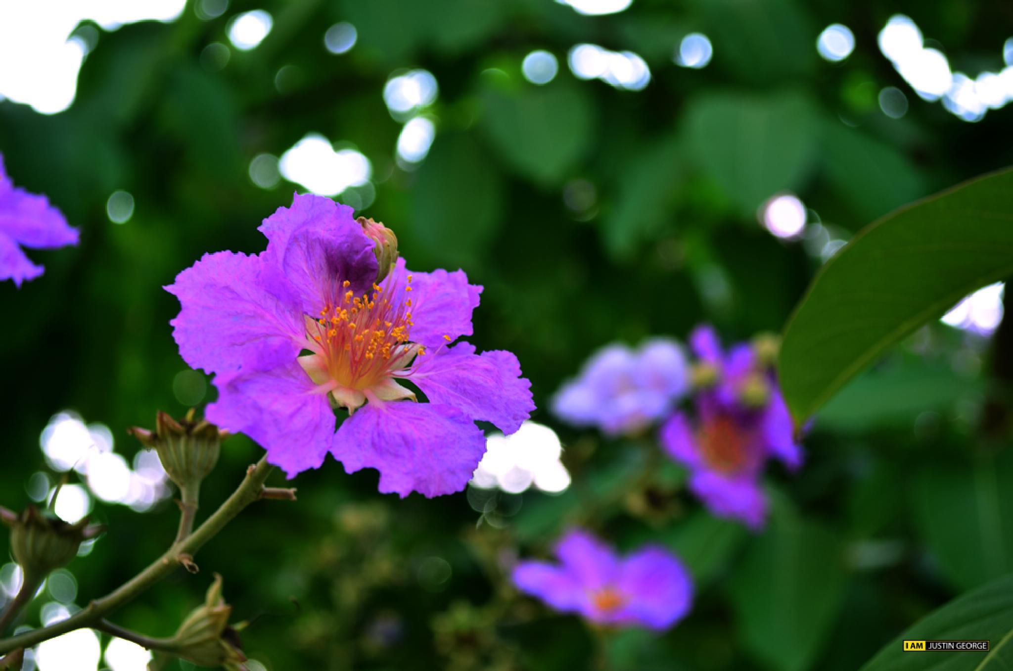 Purple Magic by justingeorge