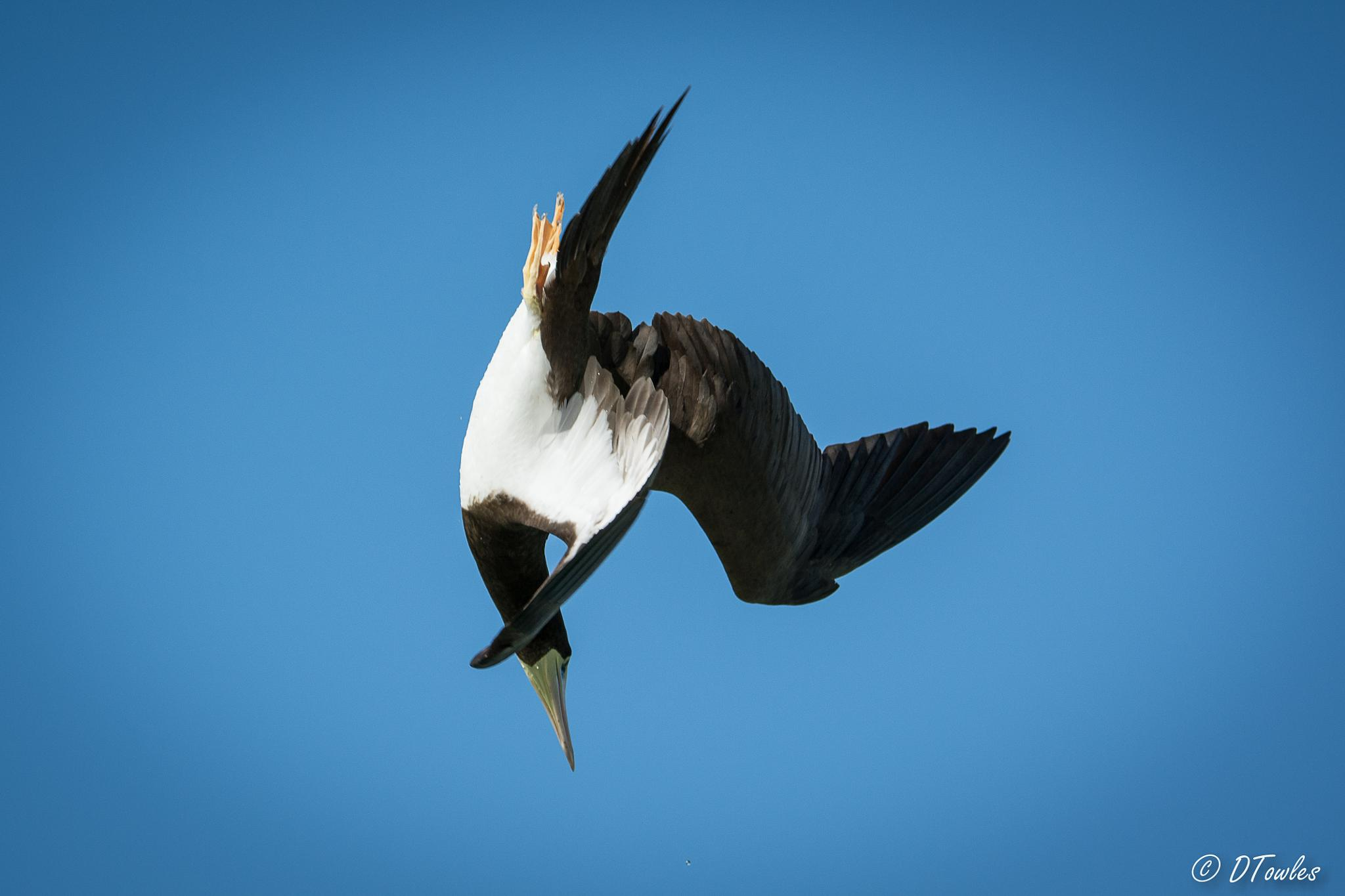 Swan Dive - well sort of by CapturedImages