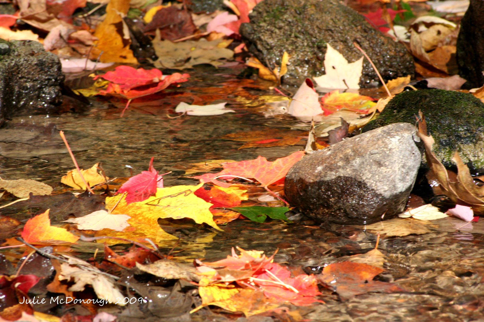Camp Cavell - leaves in a stream by julie.mcdonough.71