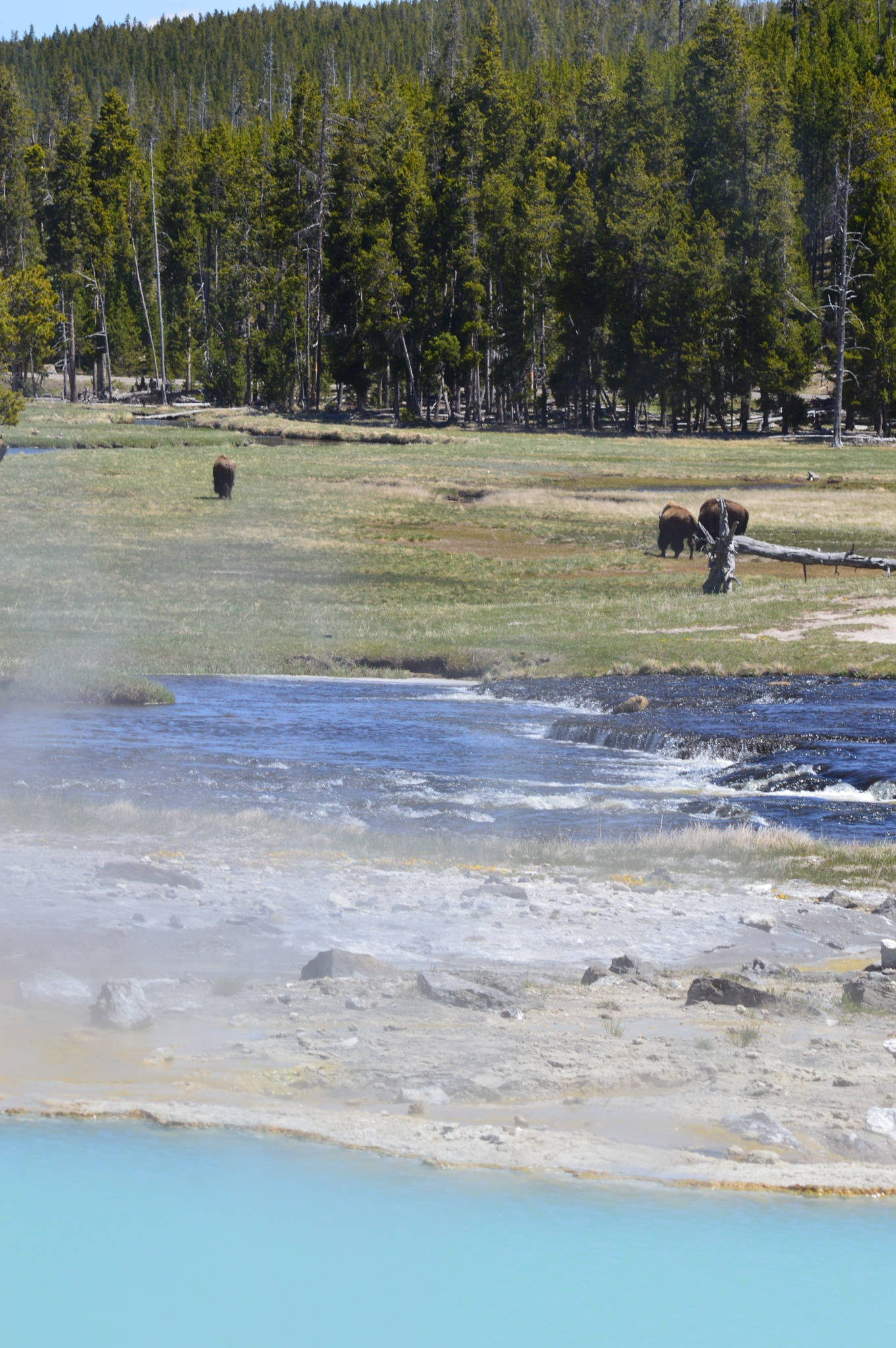 Yellowstone by cynthia.l.pena.9