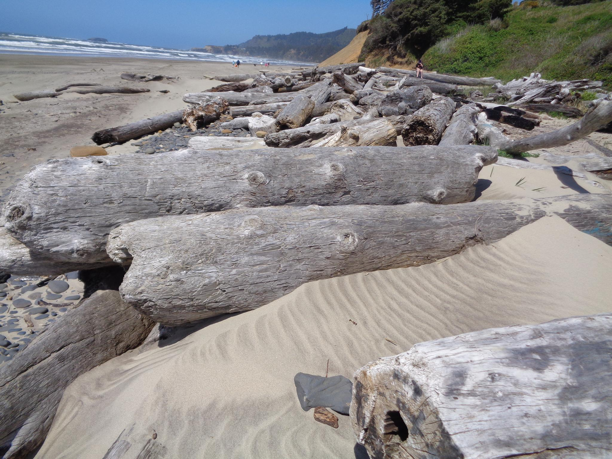 Photo in Sea and Sand #logs sandshore ocean