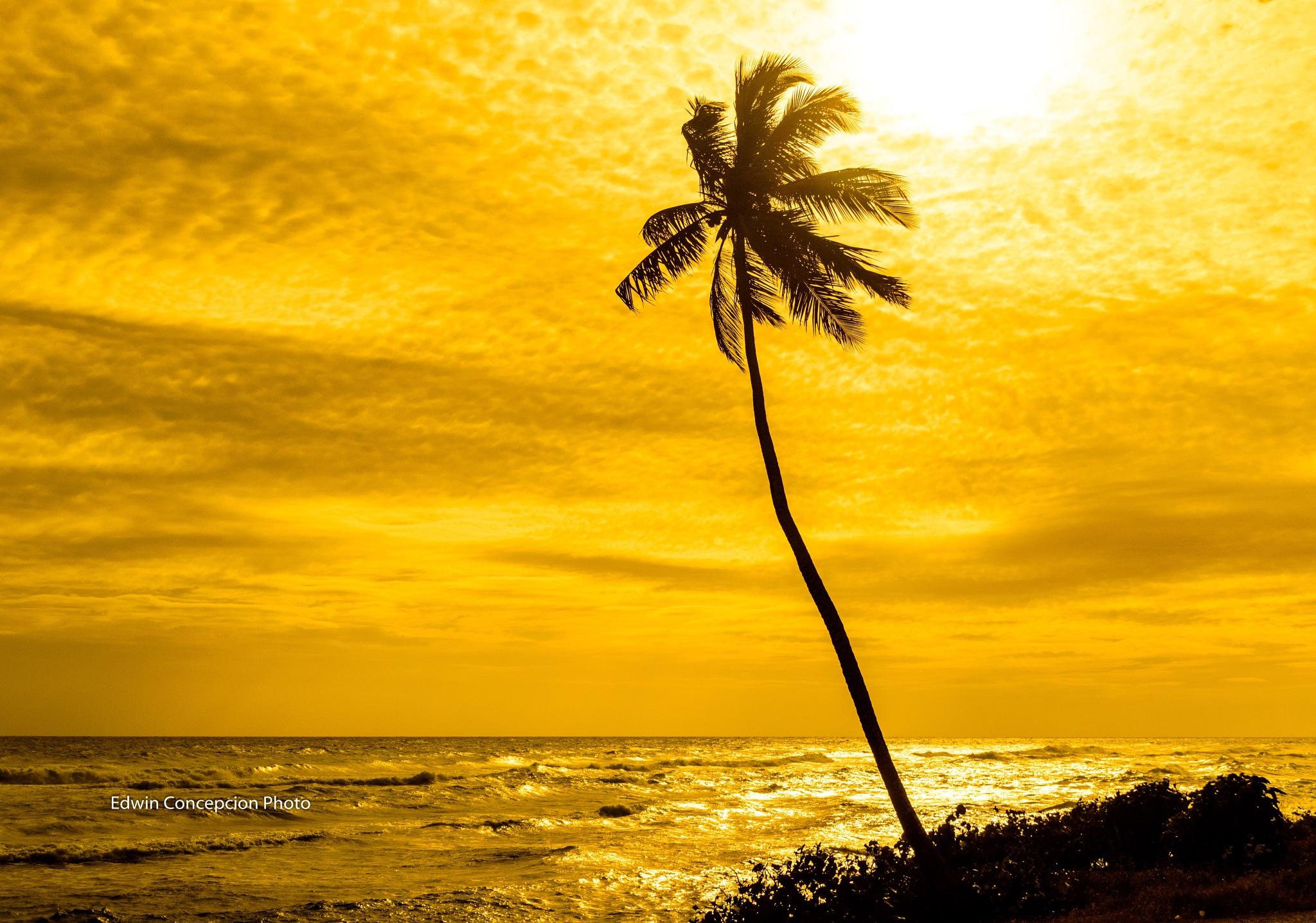 The Caribbean awaits by Edwin Concepción