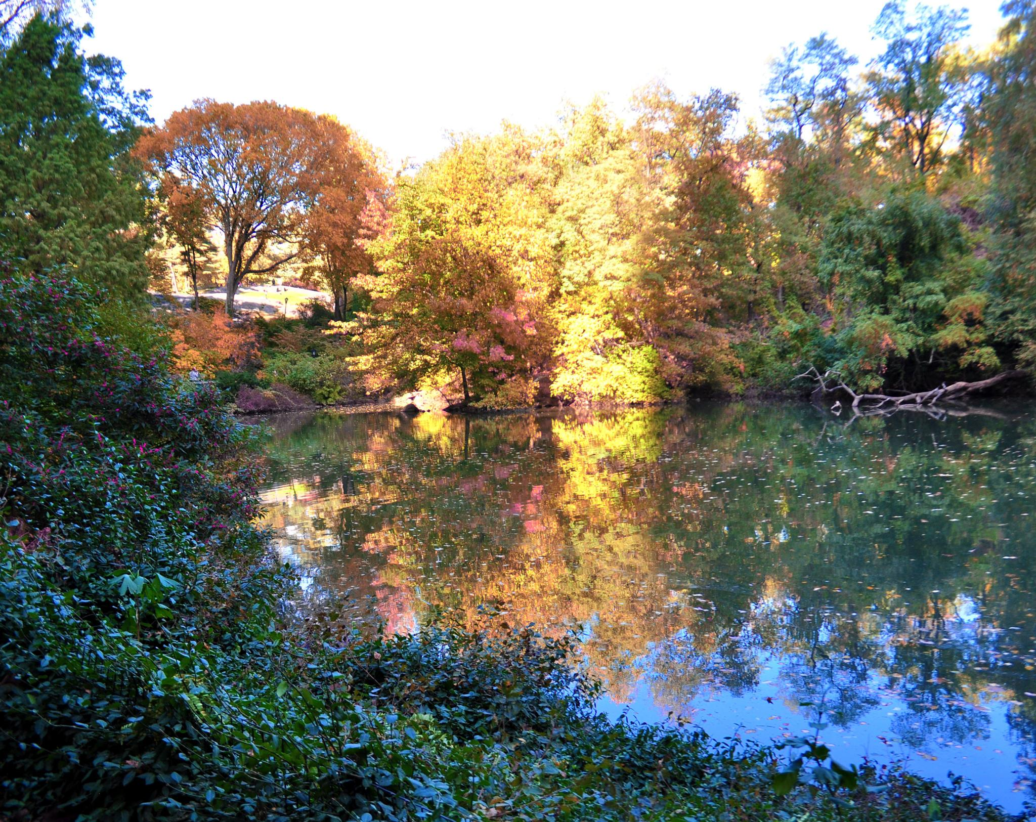 Autumn lake in Central Park by pamsheedy
