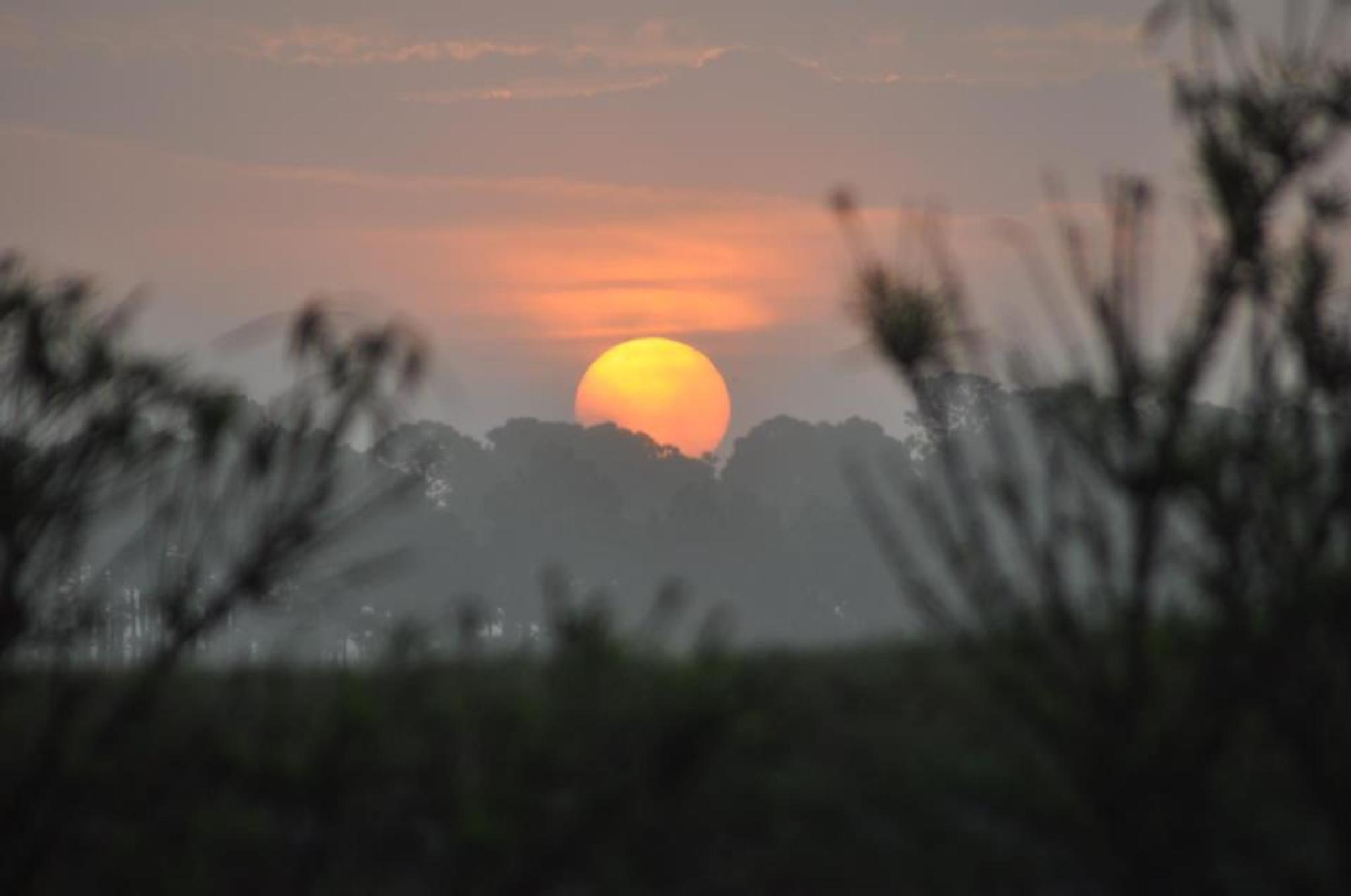 Sunset near Jensen Beach, FL by pamsheedy