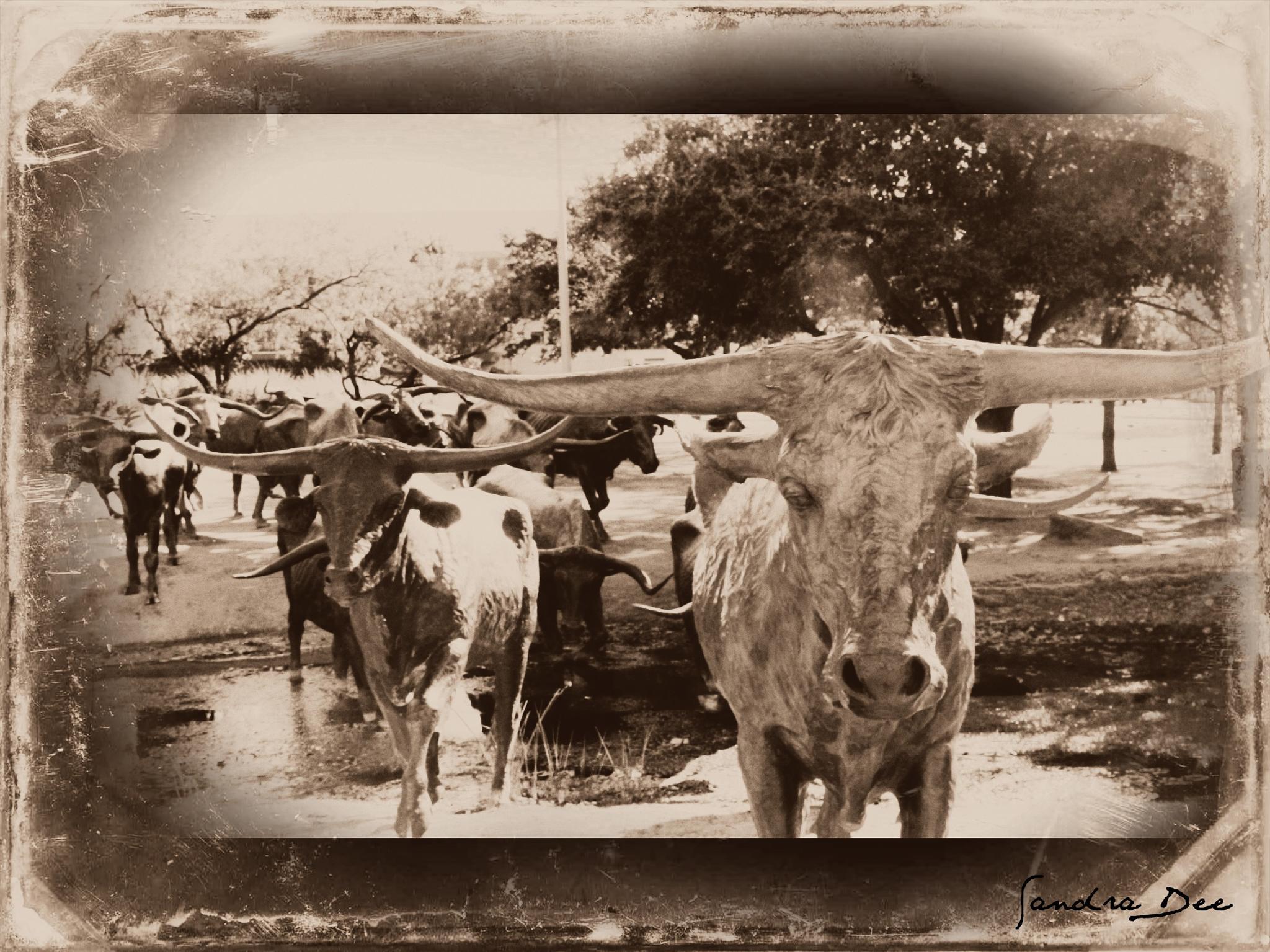 Pioneer Plaza Cattle Drive 15 by sandra.sherman.7334