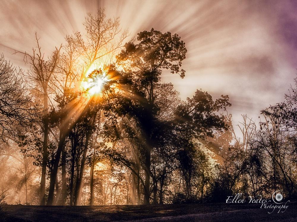 Foggy Morning in   Mystic Forest  by Ellen Yeates