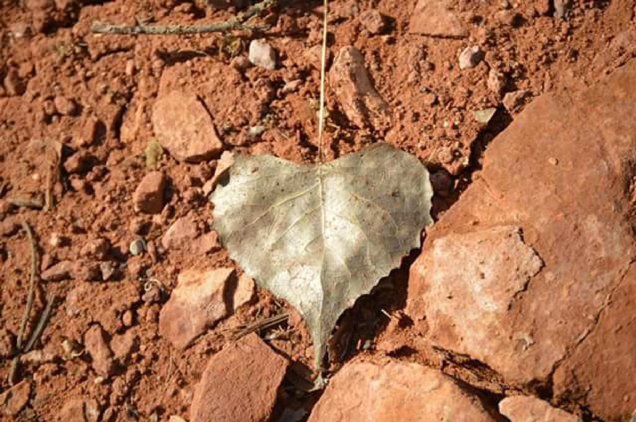 heart leaf by Gigi