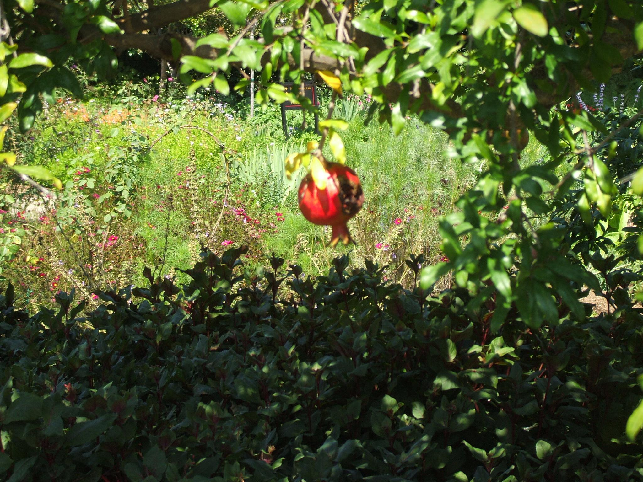 Perfect Pomegranate by CatmotherMissKitty