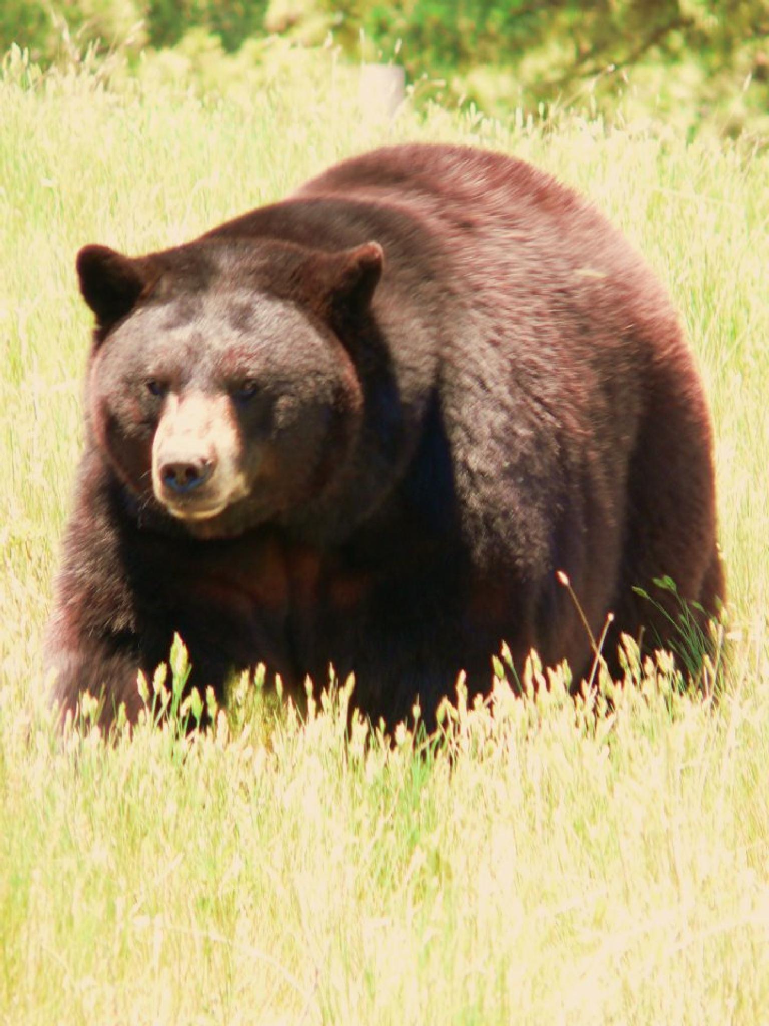 Papa Bear by lkopp65