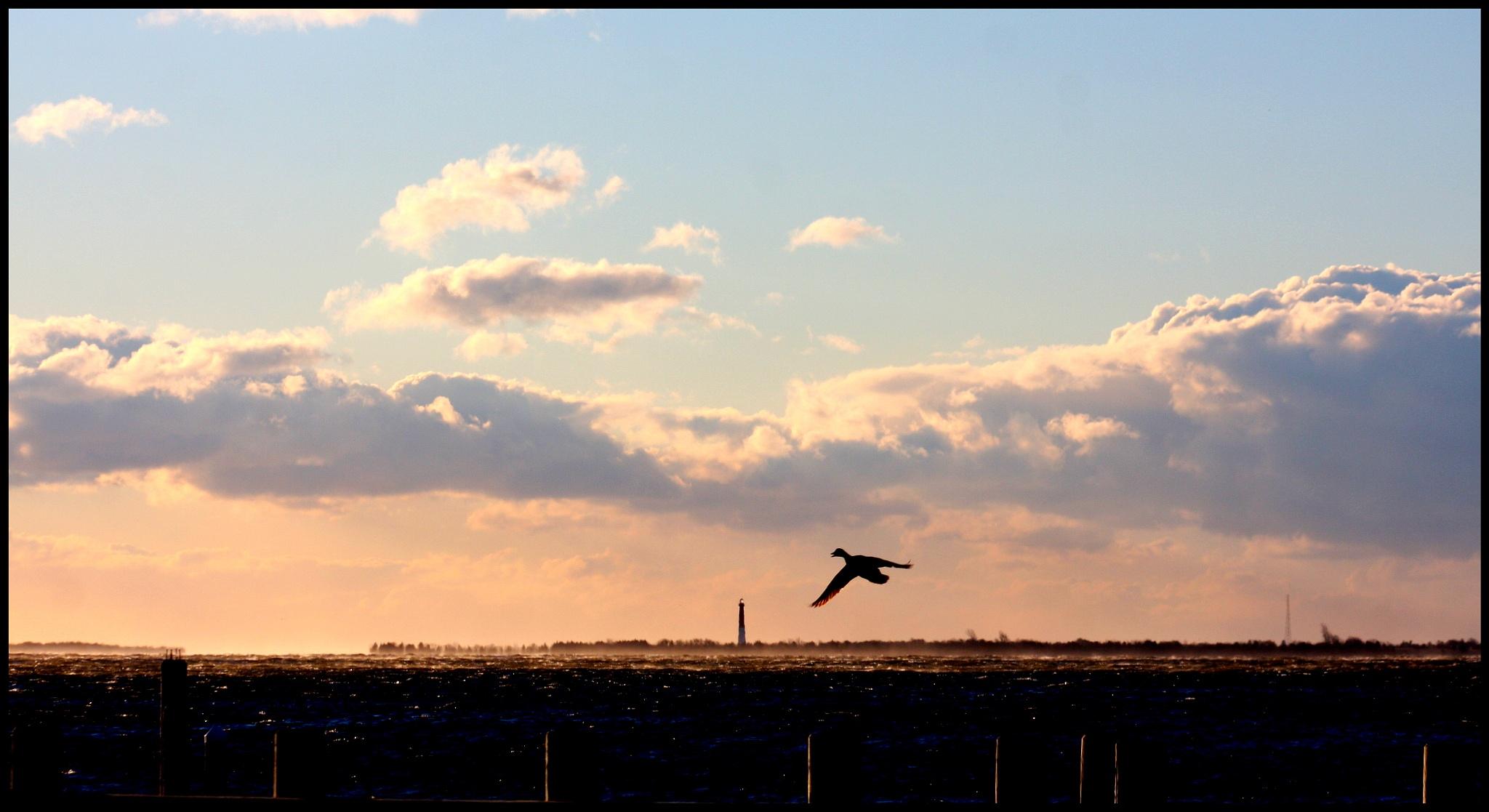 Wild Winds On Barnegat Bay, New Jersey by dawn.breslinlynch