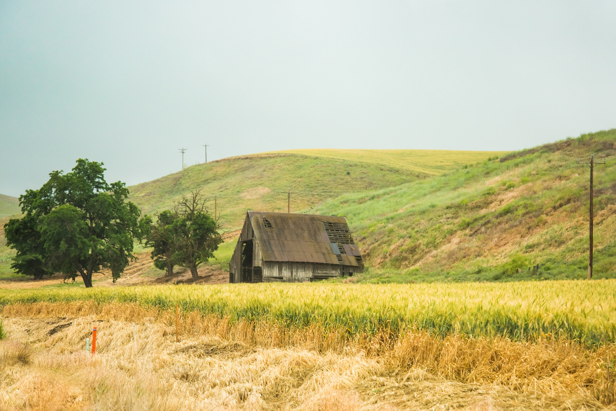 Little lonely barn  by Moments Photography by Gabriela