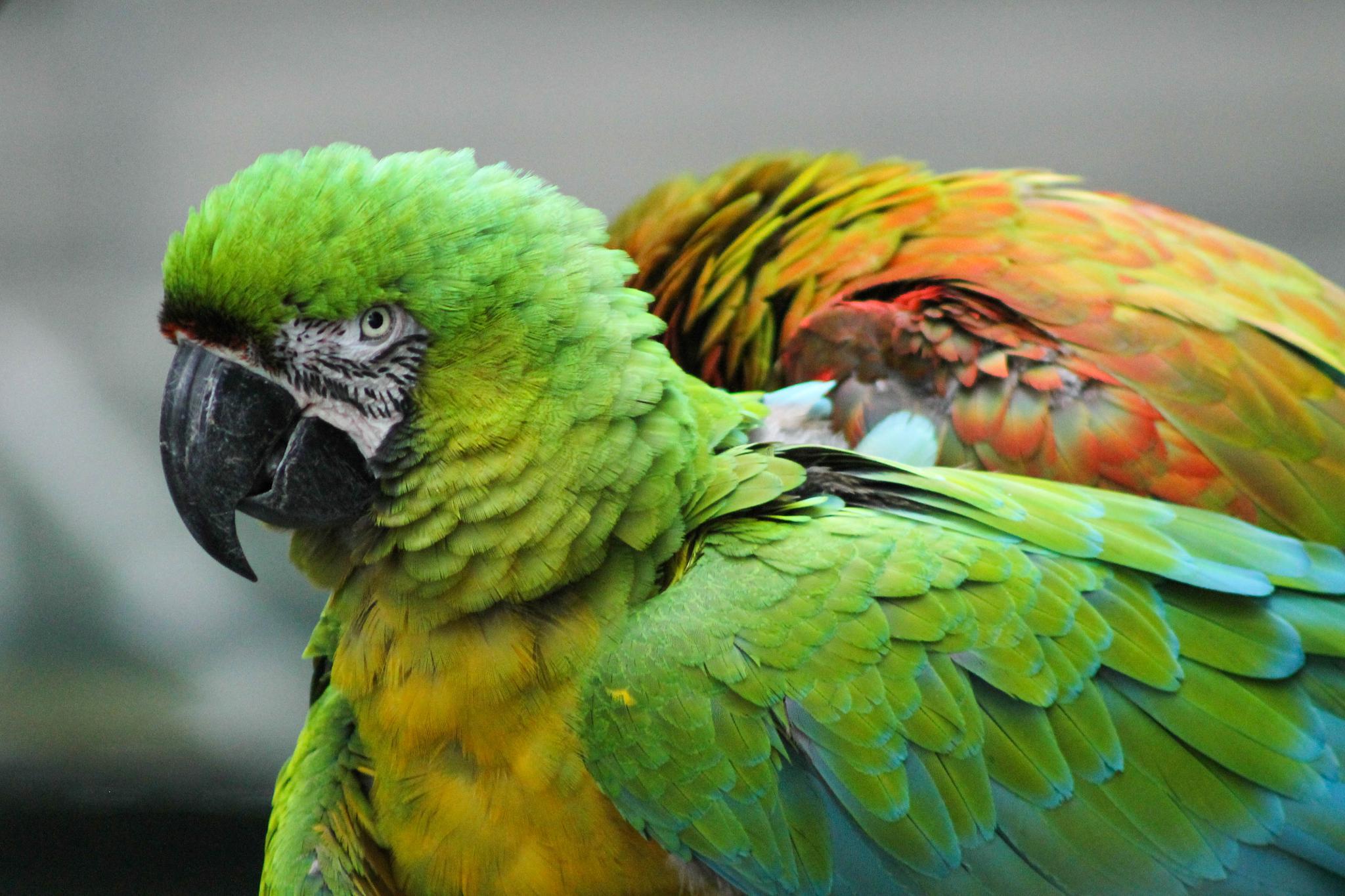 Ruffled Feathers by jill.friedman.395