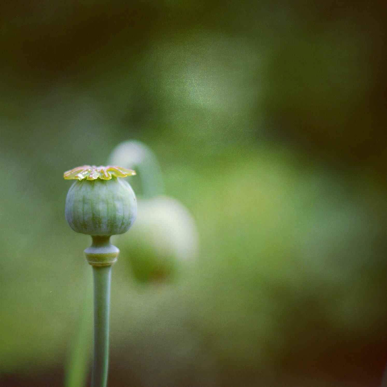 Poppyseed! by mariekekz