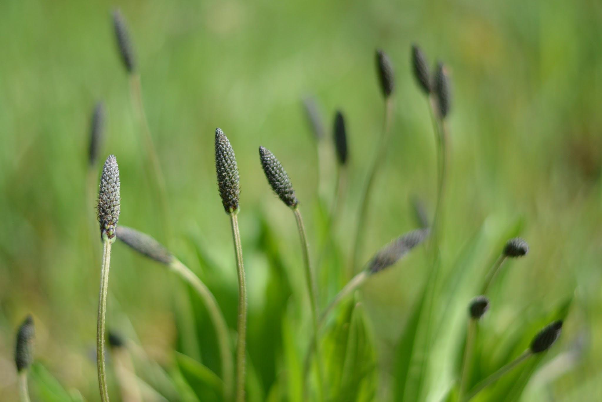 Summer grass! by mariekekz