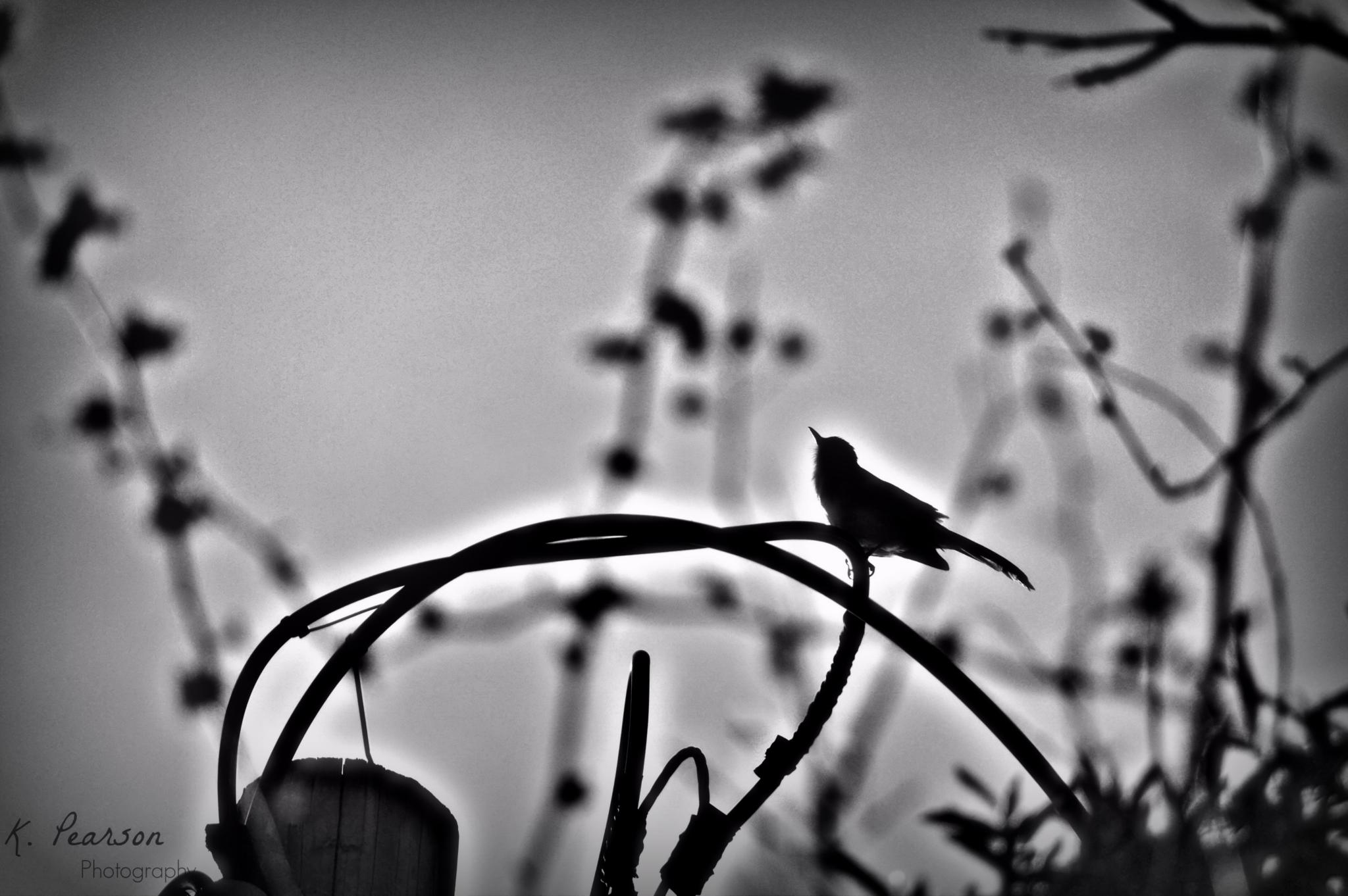 Morning Song by karen.pearson.184