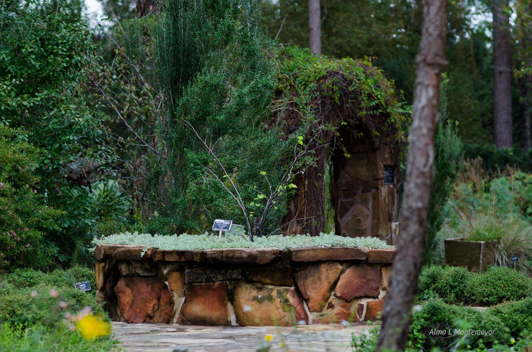 Mercer Arboretum in Houston Texas by Alma