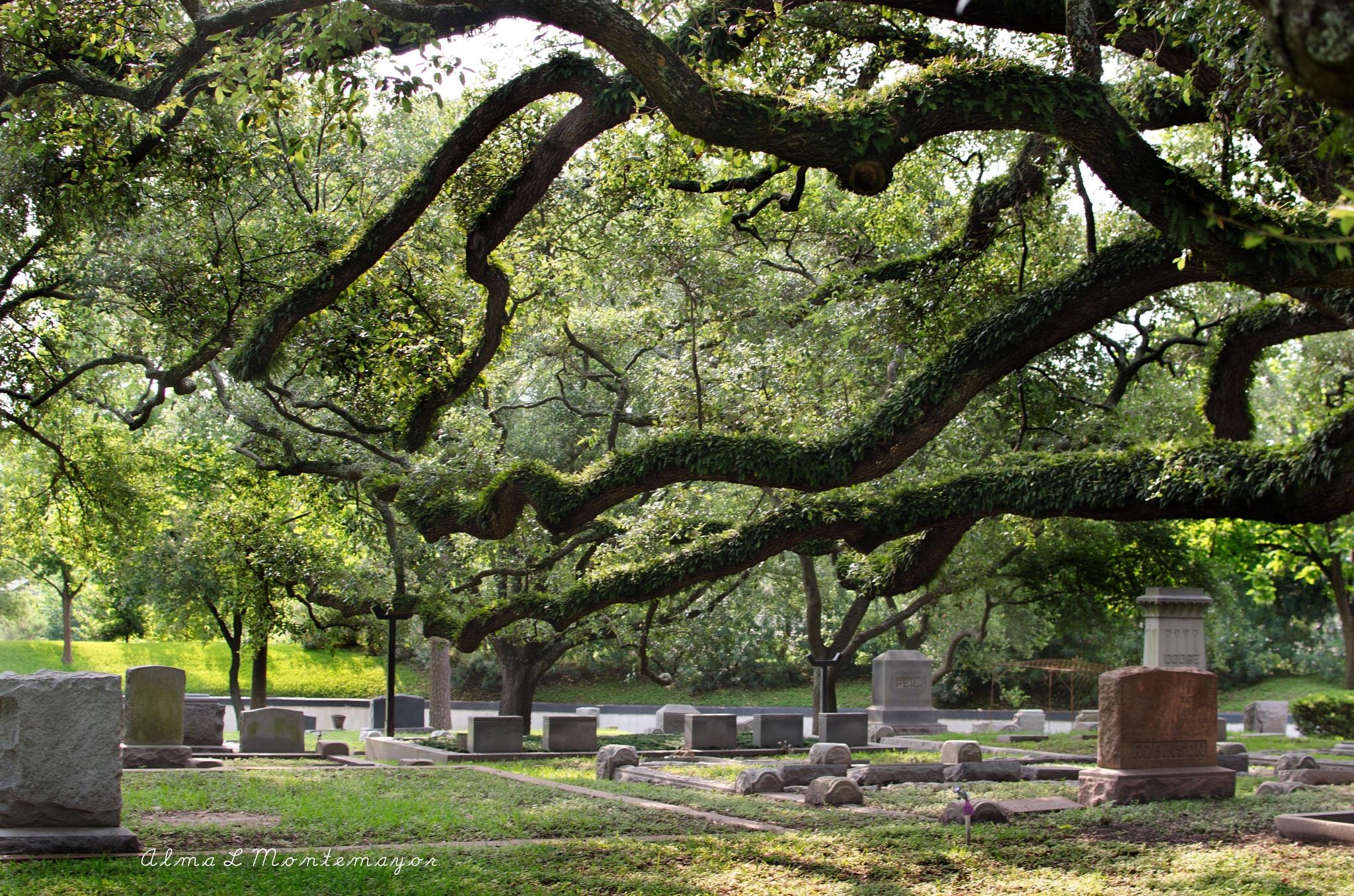 Glenwood Cemetery by Alma