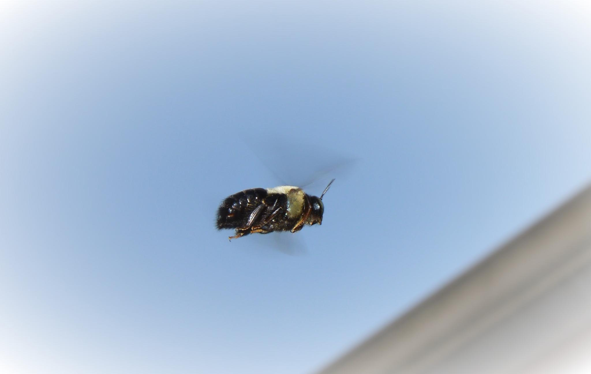 Bee- utiful ... by rhonda.mccartney.5