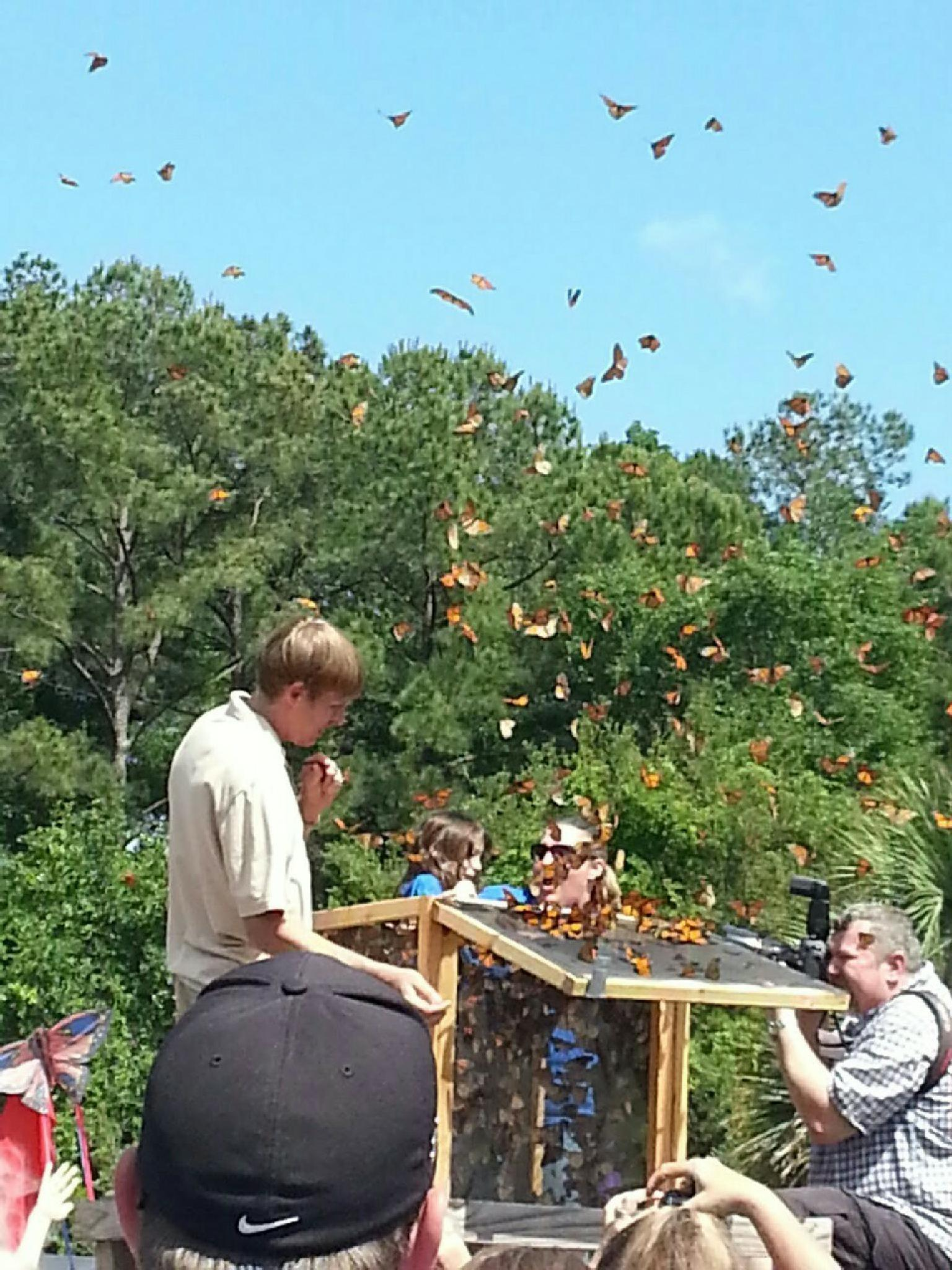 Release of the Monarch Butterflies  by aida.carpena