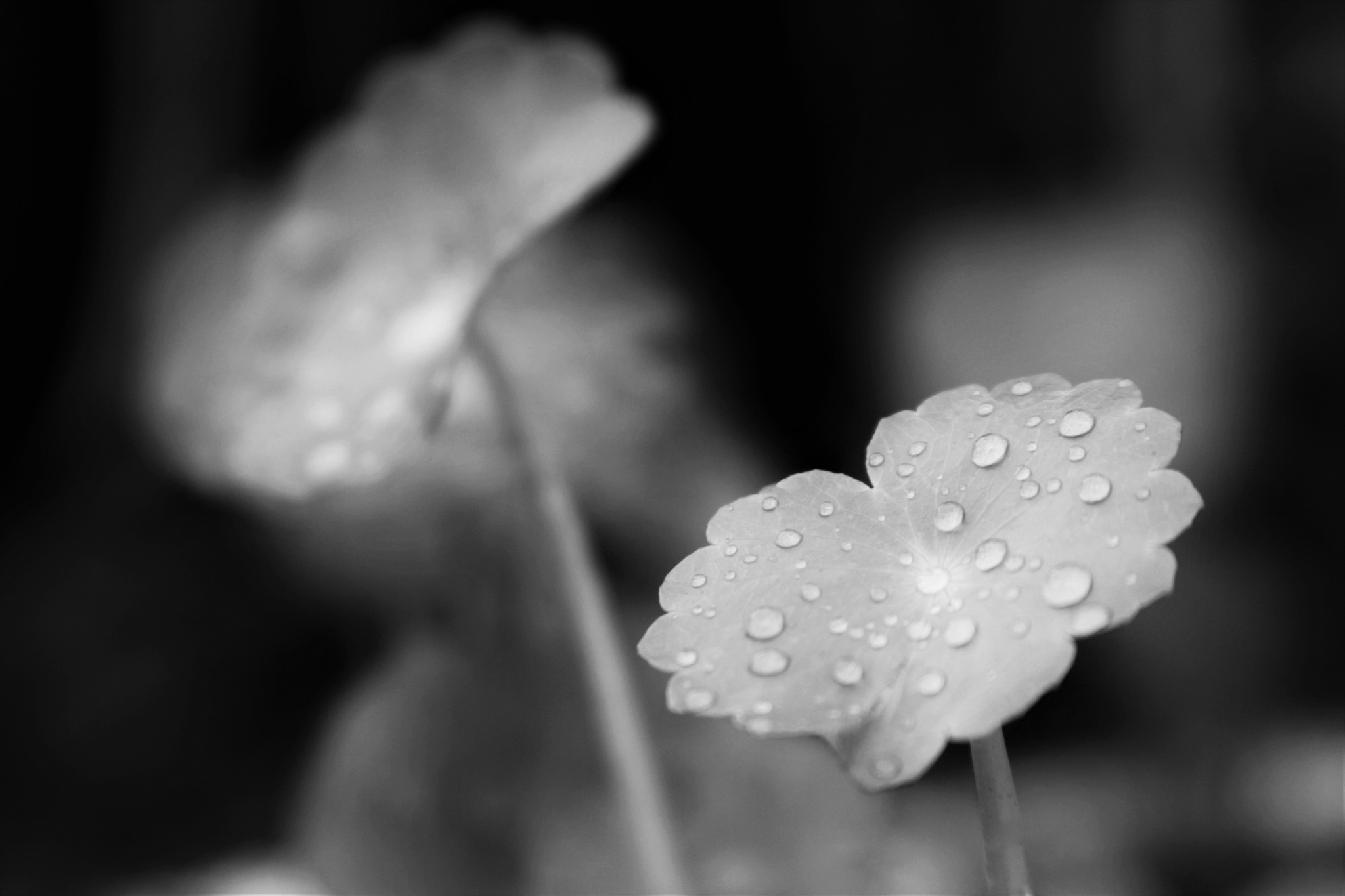 After The Rain by Roben Blaize