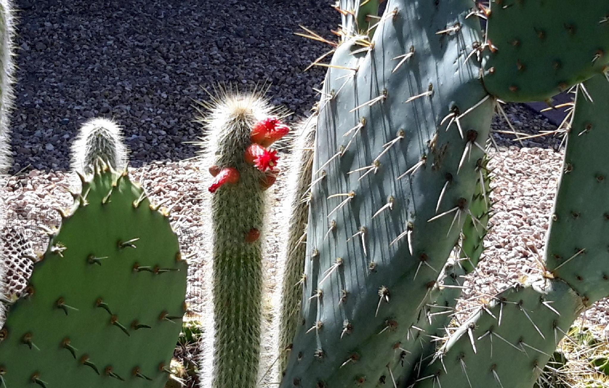 Tiny cactus flower by jemagurl