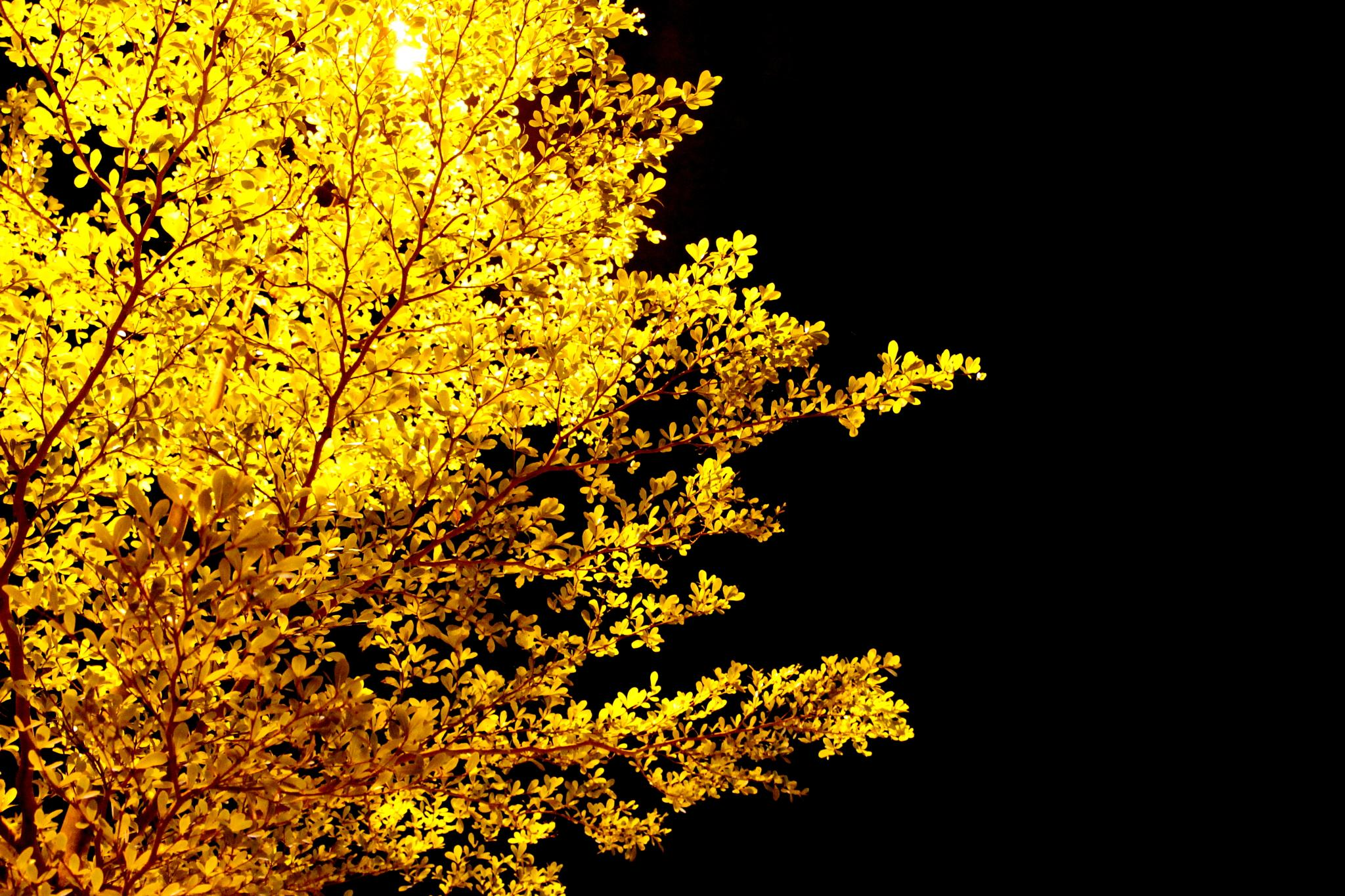 Oriental Tree By Night by Andreia_Costa