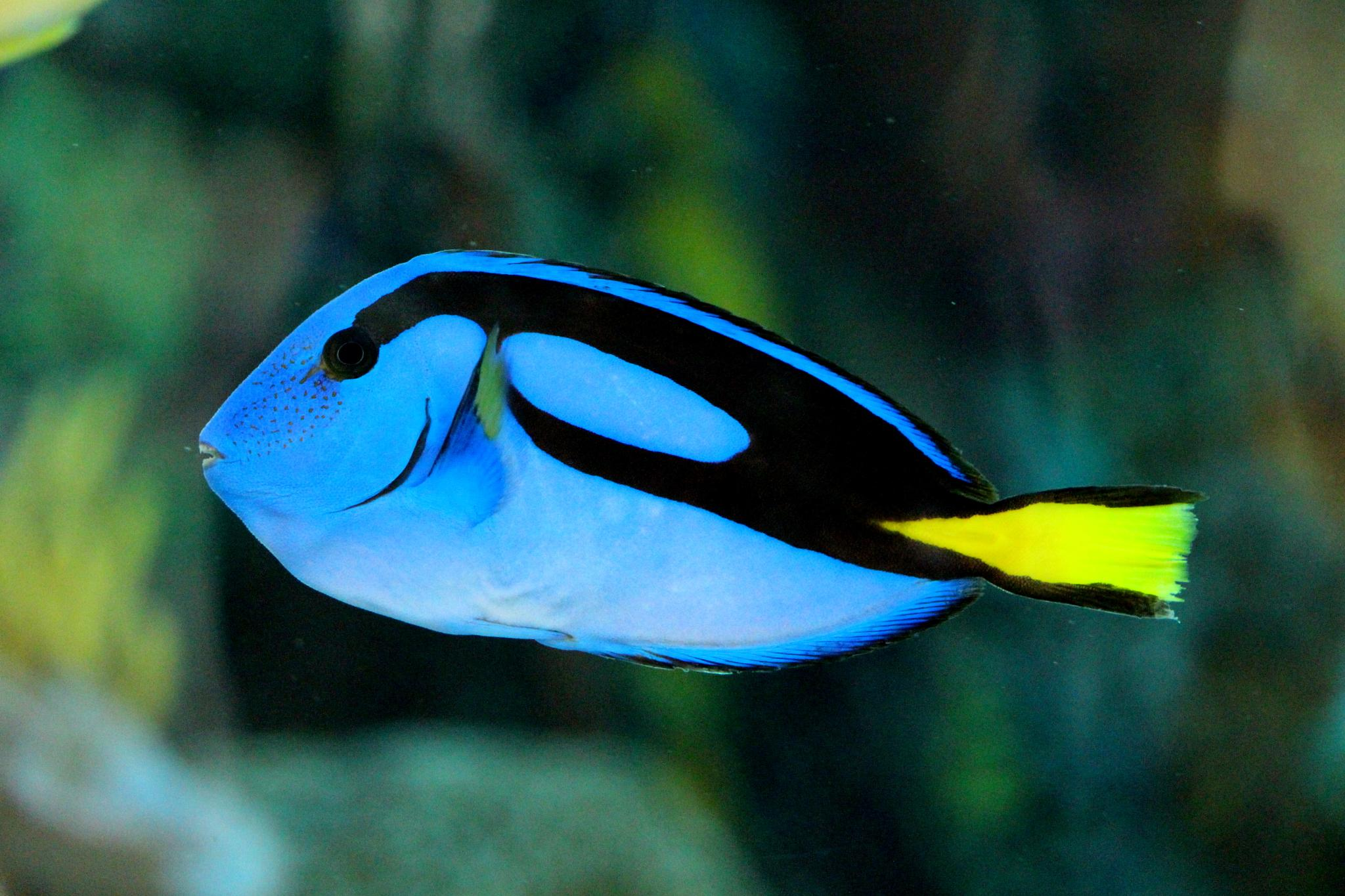 Miss Dory  by Andreia_Costa