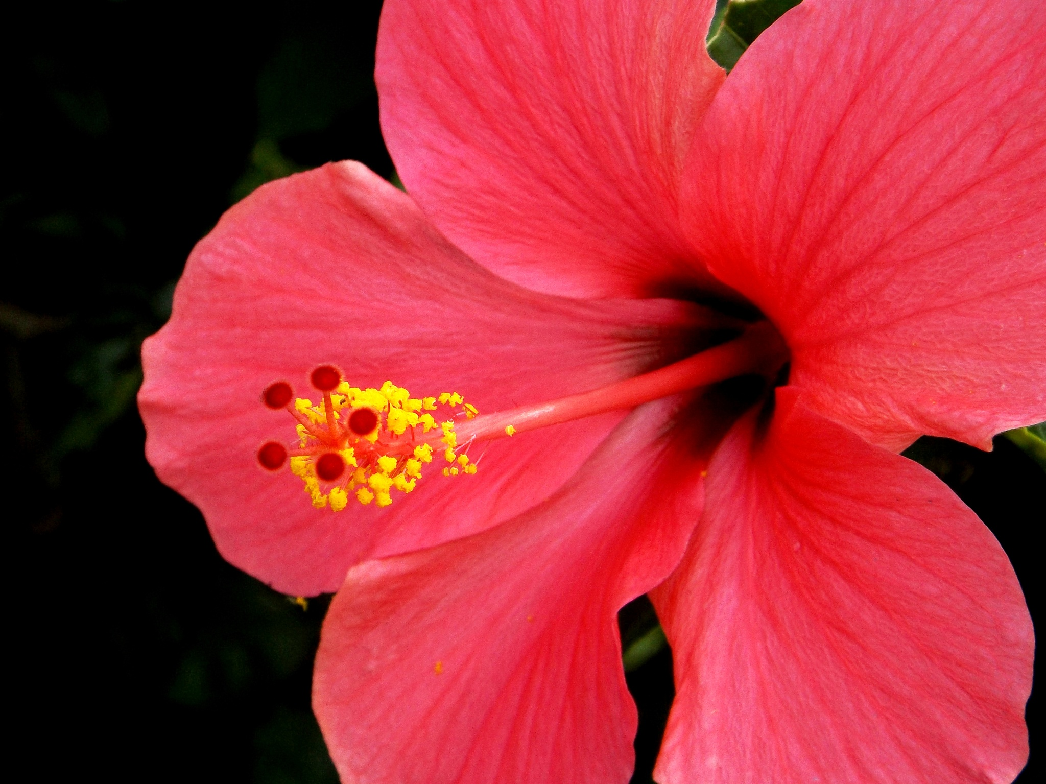 flower by ryutaro