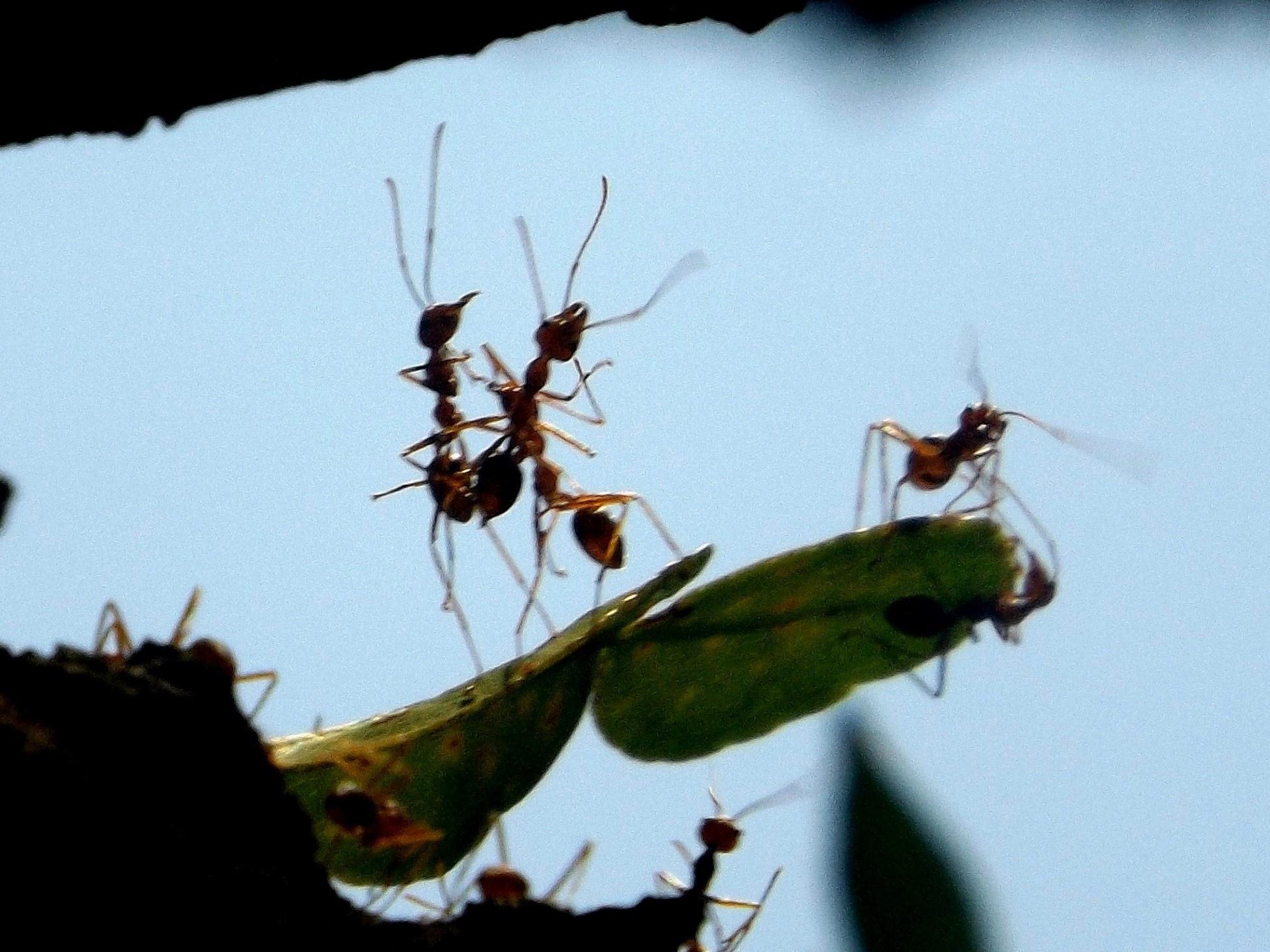 ant dancing by ryutaro