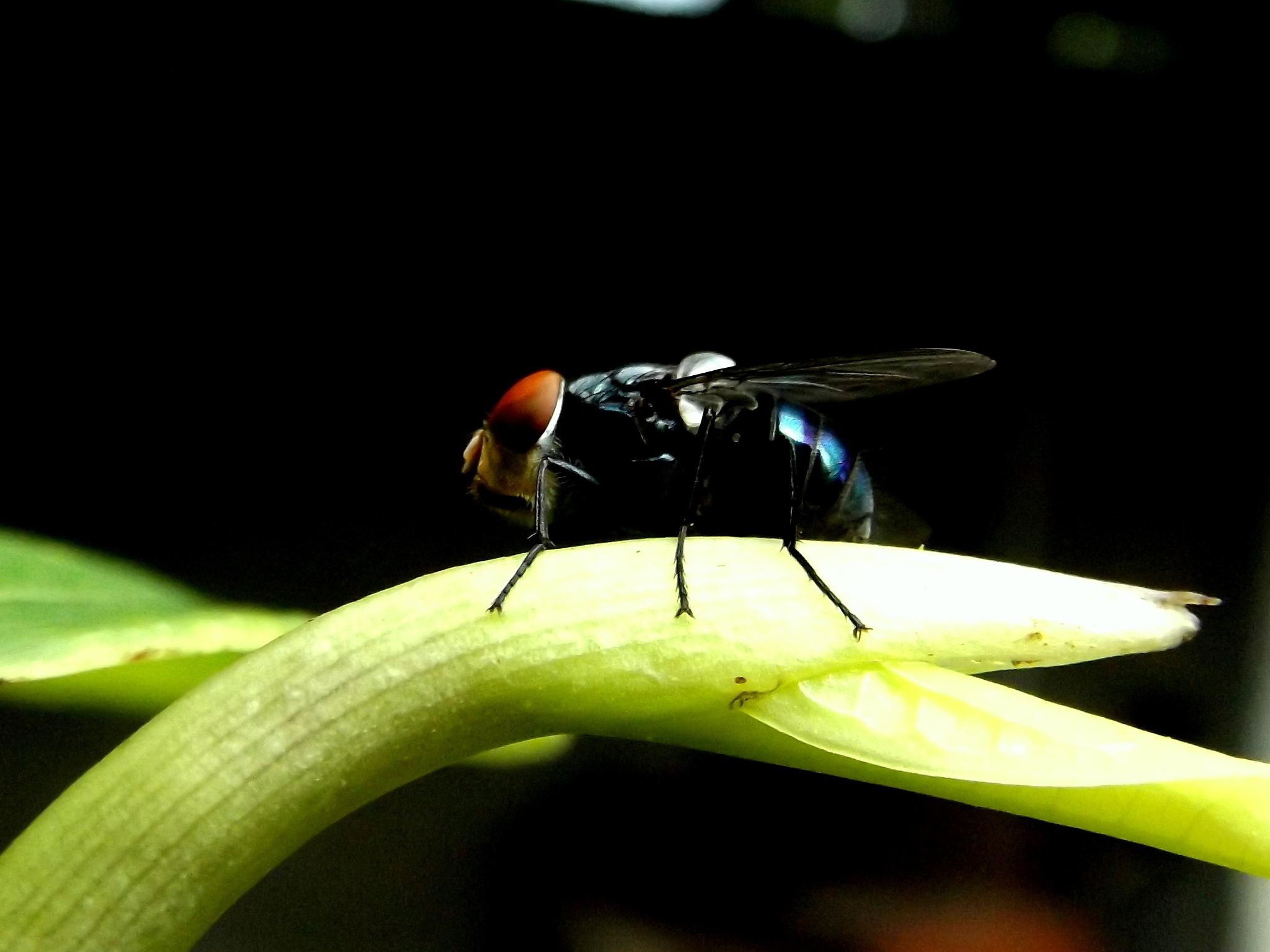 flies by ryutaro