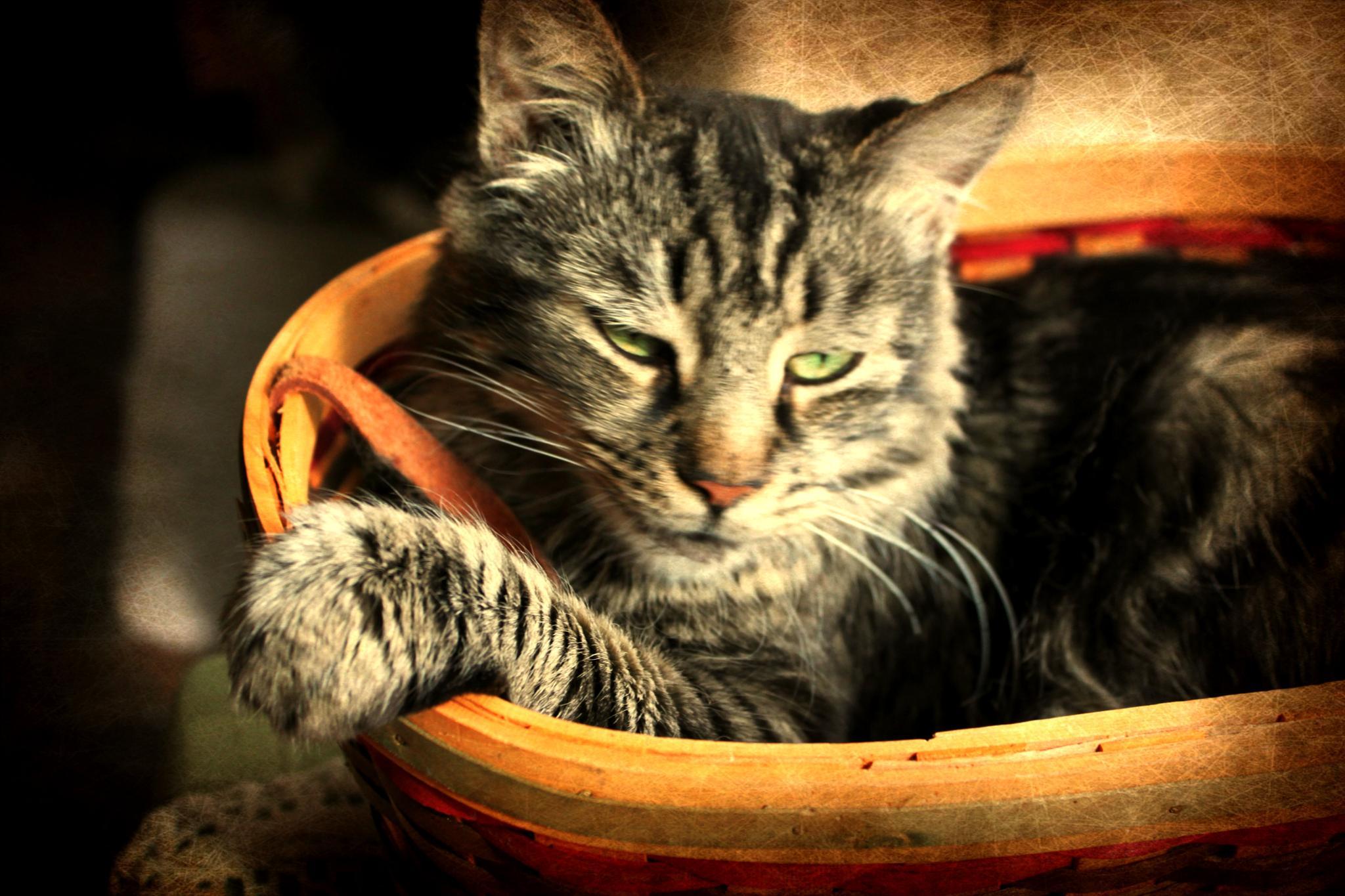Cat by Catjar
